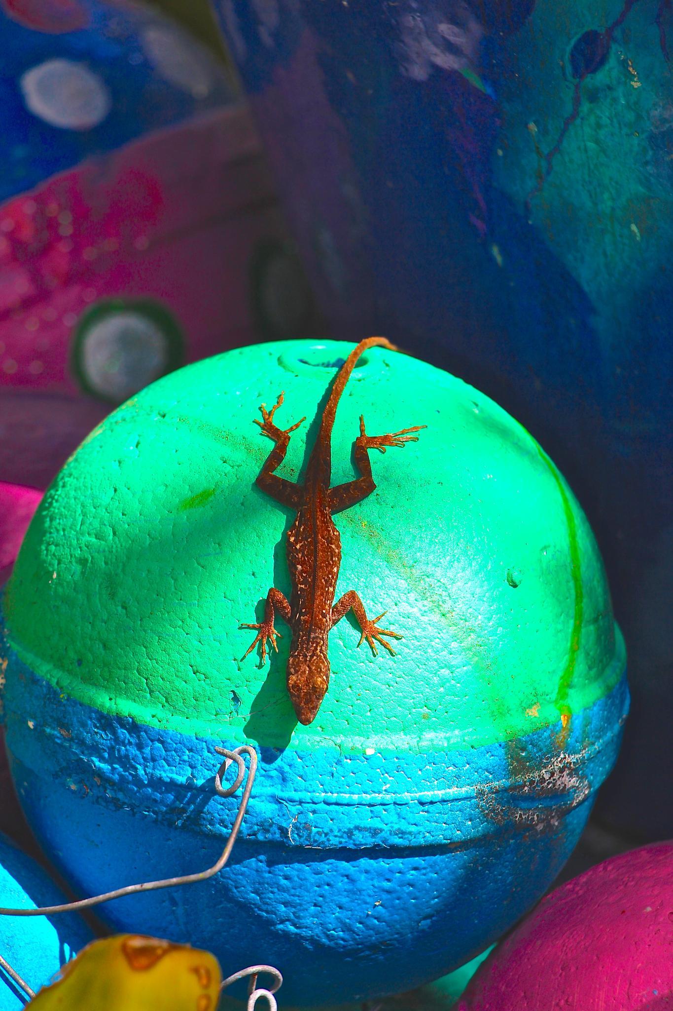 Art Lizard by konrath_ds