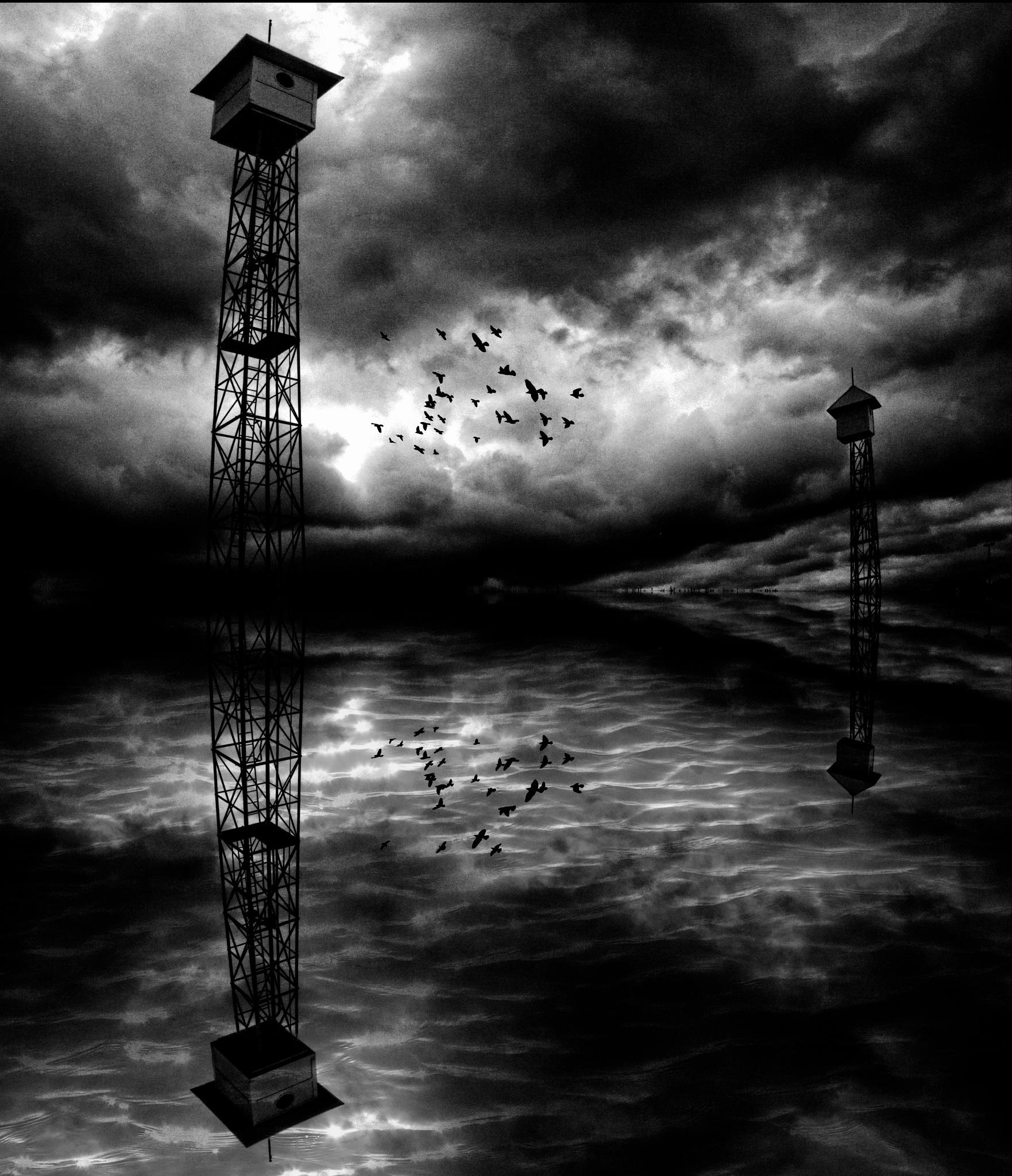 INTO THE STORM by David DeBord