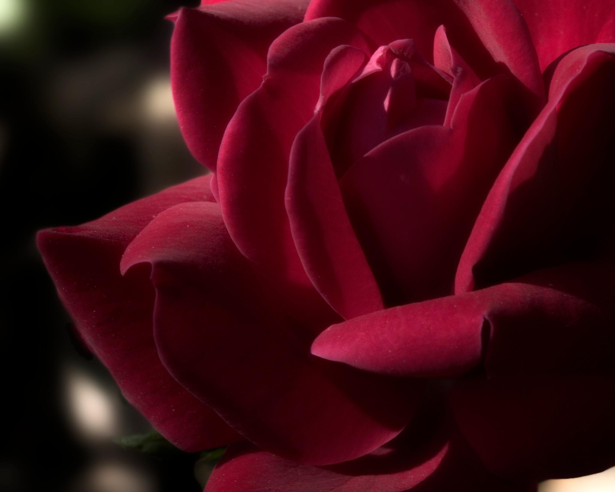 Red Velvet by David DeBord