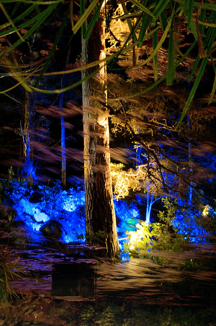 The Enchanted Forest  by Ian Scrimgeour