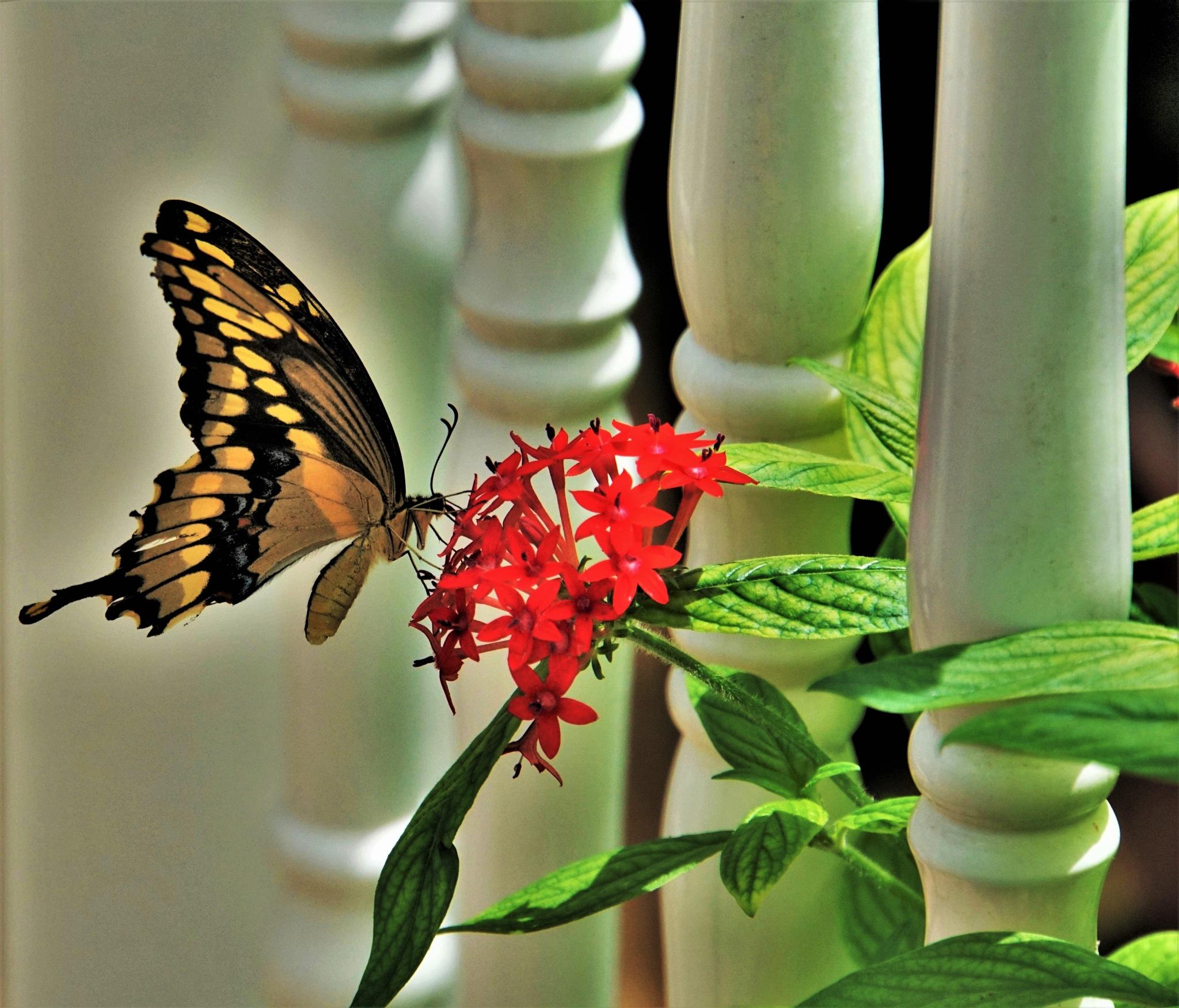 Balusters&Butterfly by Greg L. Elder