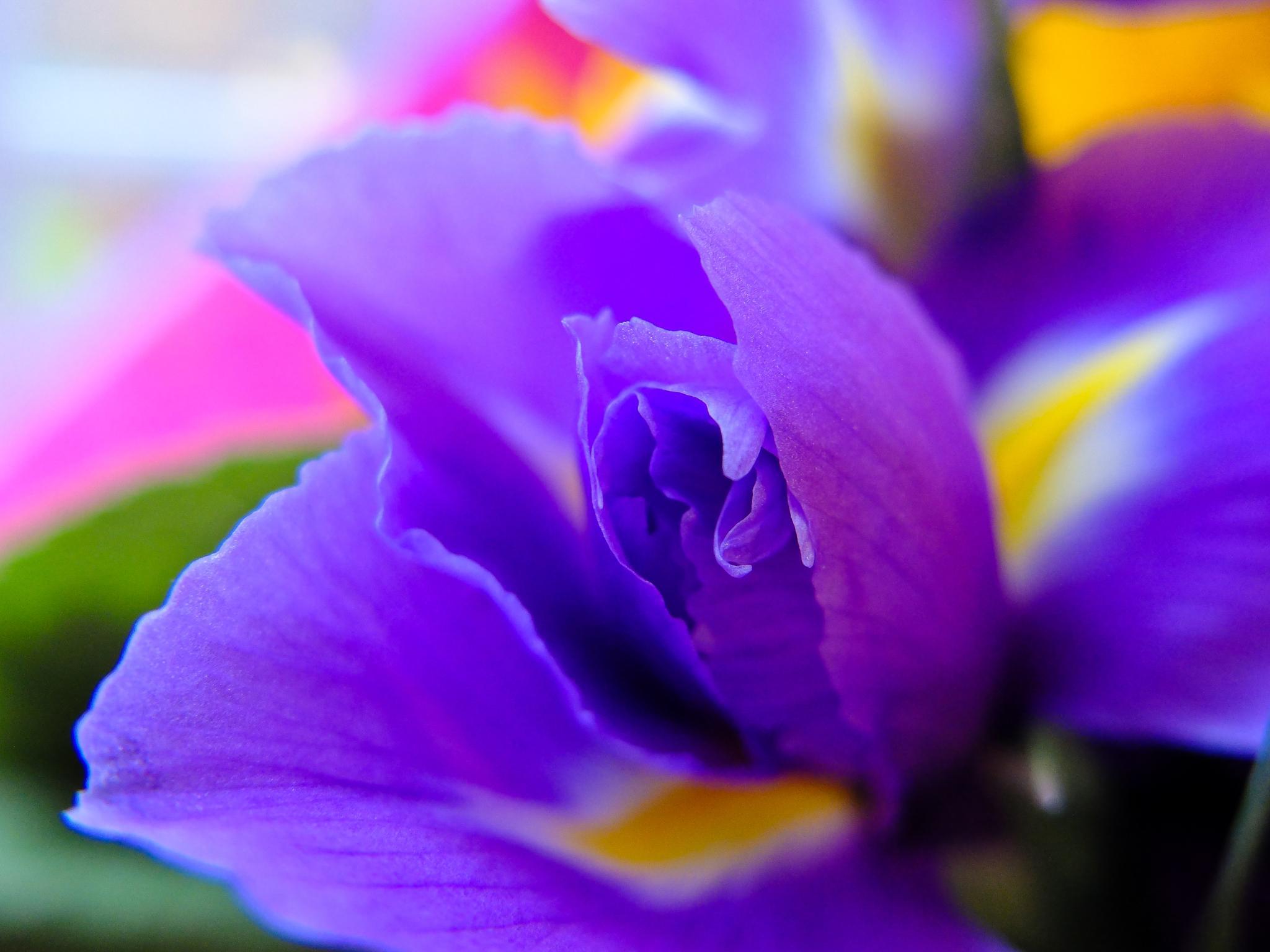 Flower by Adam Higgitt