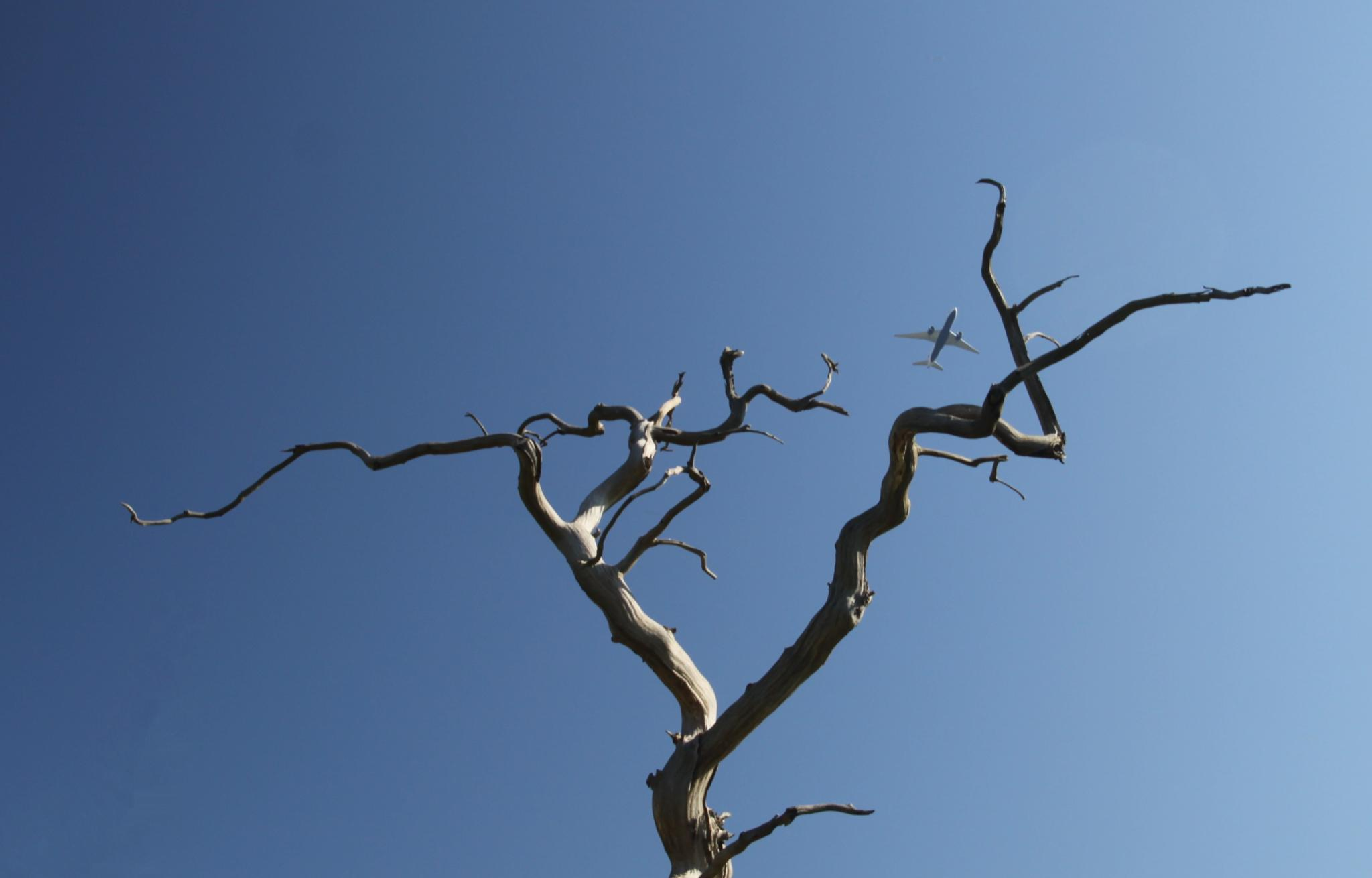New Bird, Old Tree by Phil Webb
