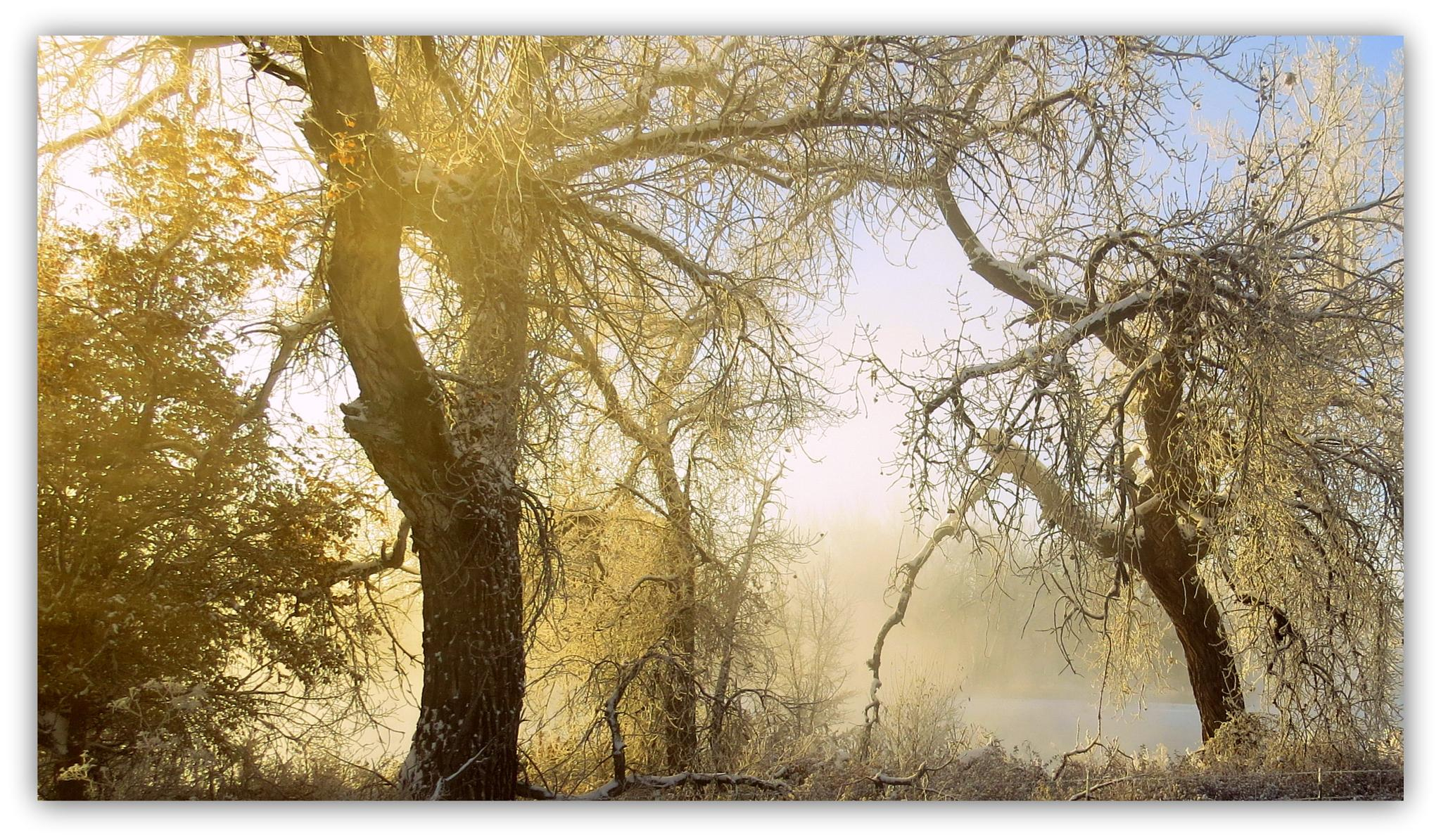 Trees and fog by lori.adkins.58