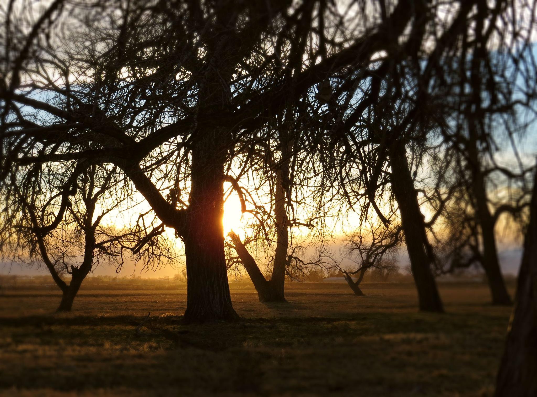 Woodland Sunset by lori.adkins.58