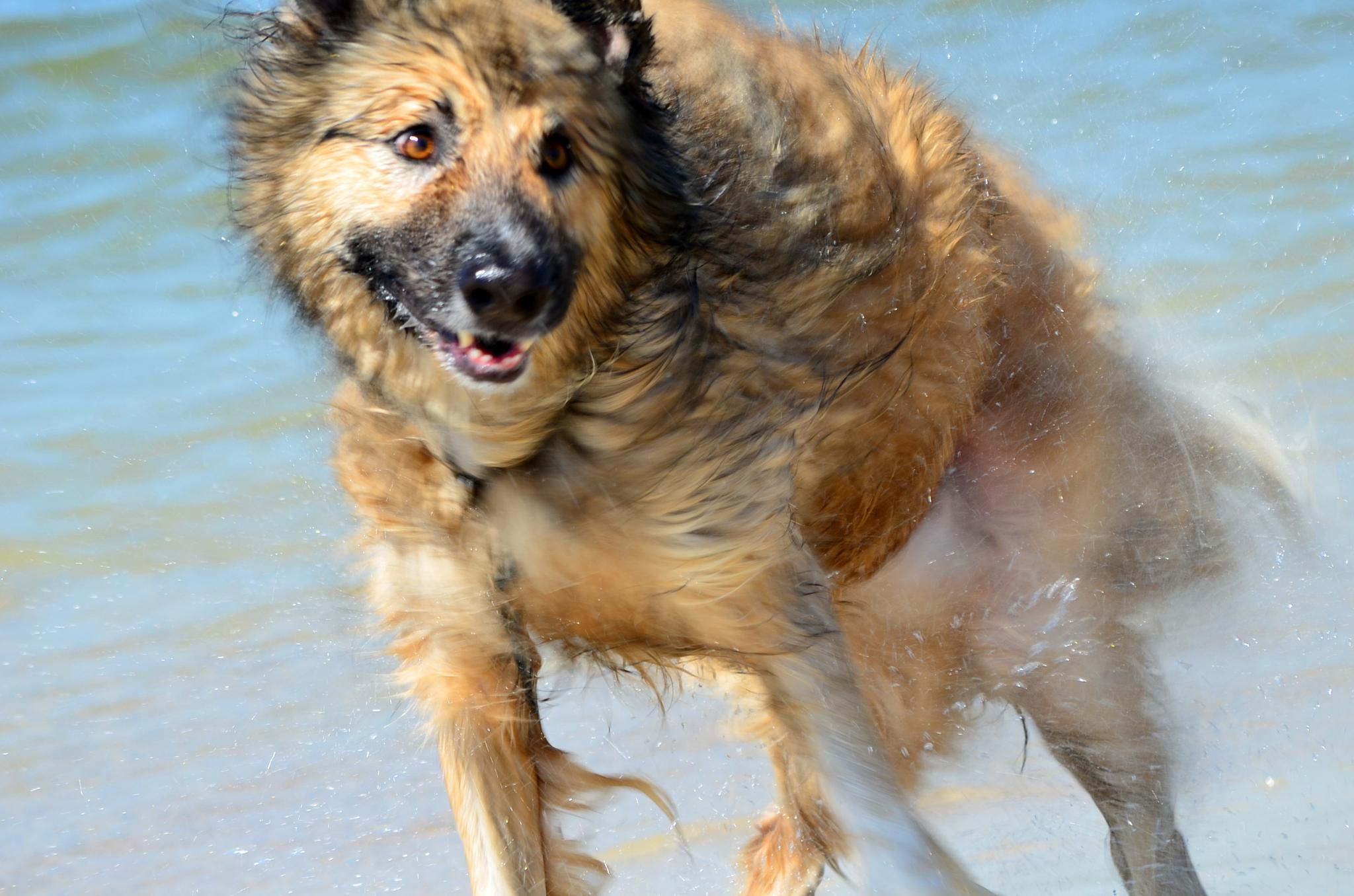 Dog Beachin' by laura.hammondkingsley