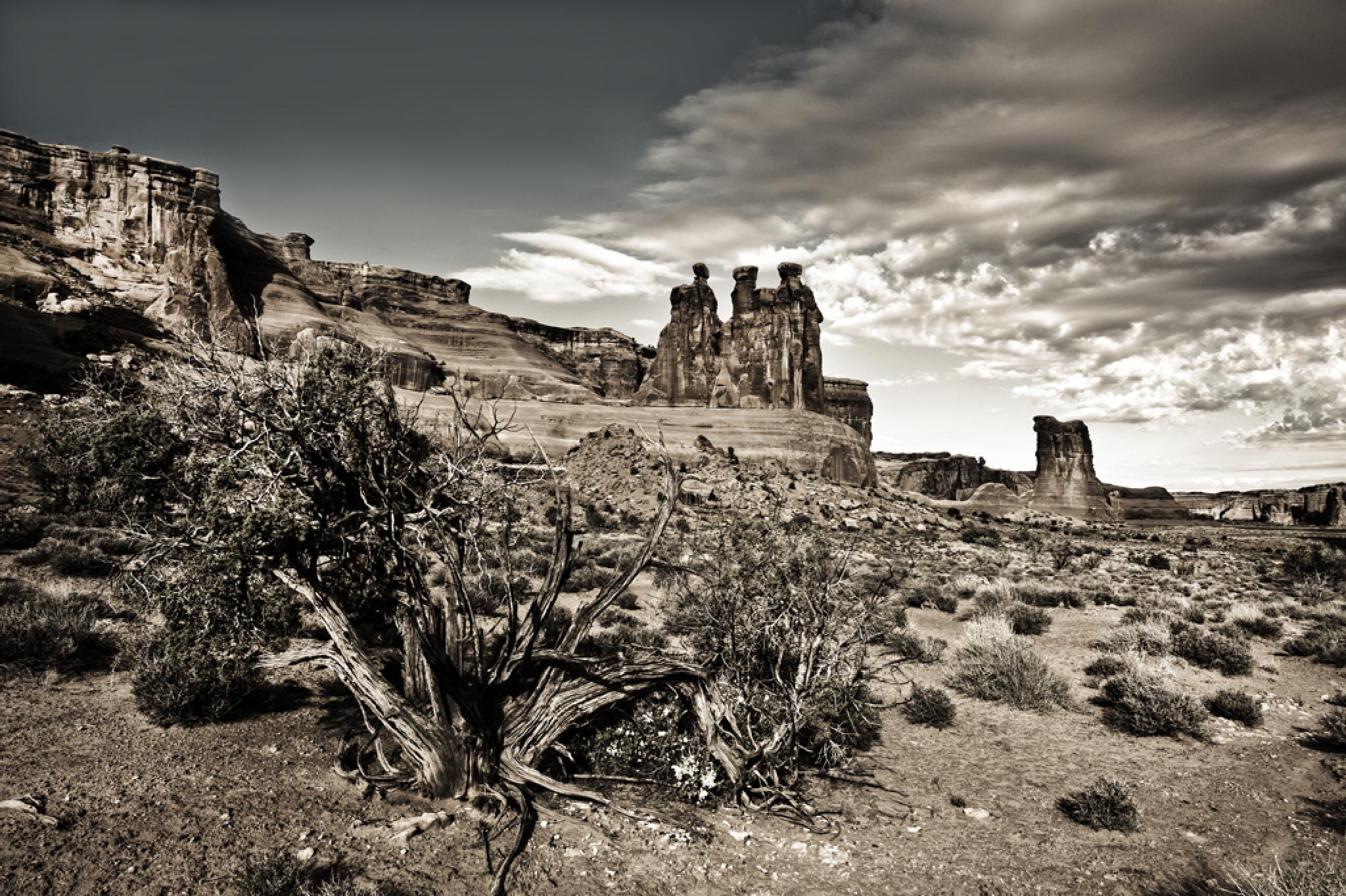 Arches National Park by Pazzophoto