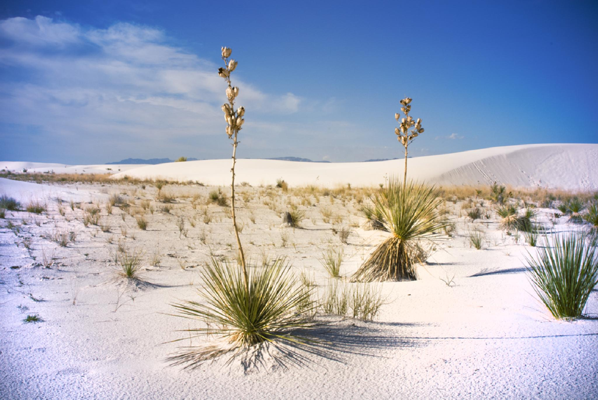 White Sands National Monument by Pazzophoto
