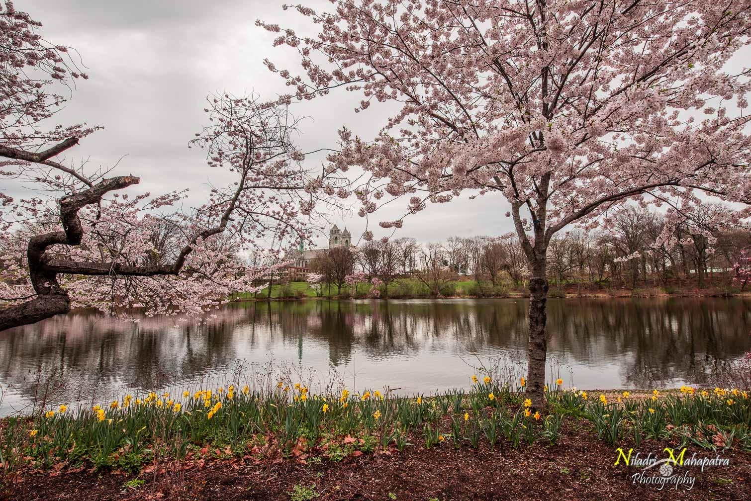 Spring BranchBrook Park NJ by Niladri Mahapatra
