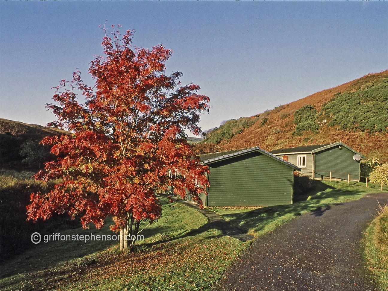The Red Rowan Tree by Thomas Dyer@griffonstephenson.com