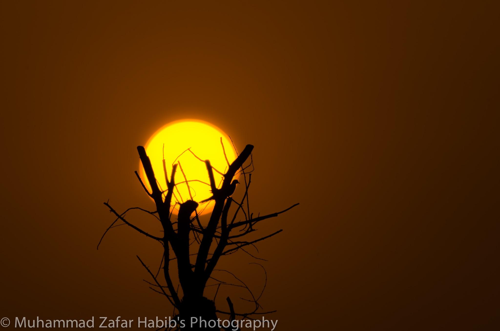 Untitled by Muhammad Zafar Habib