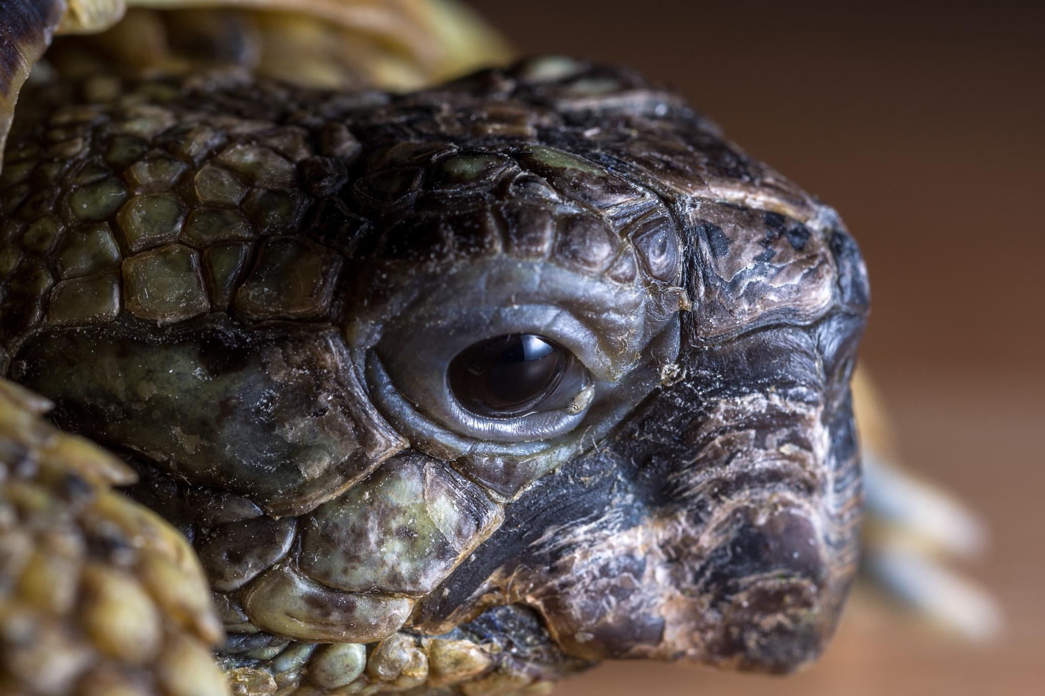 Tortoise by Gary Ellis