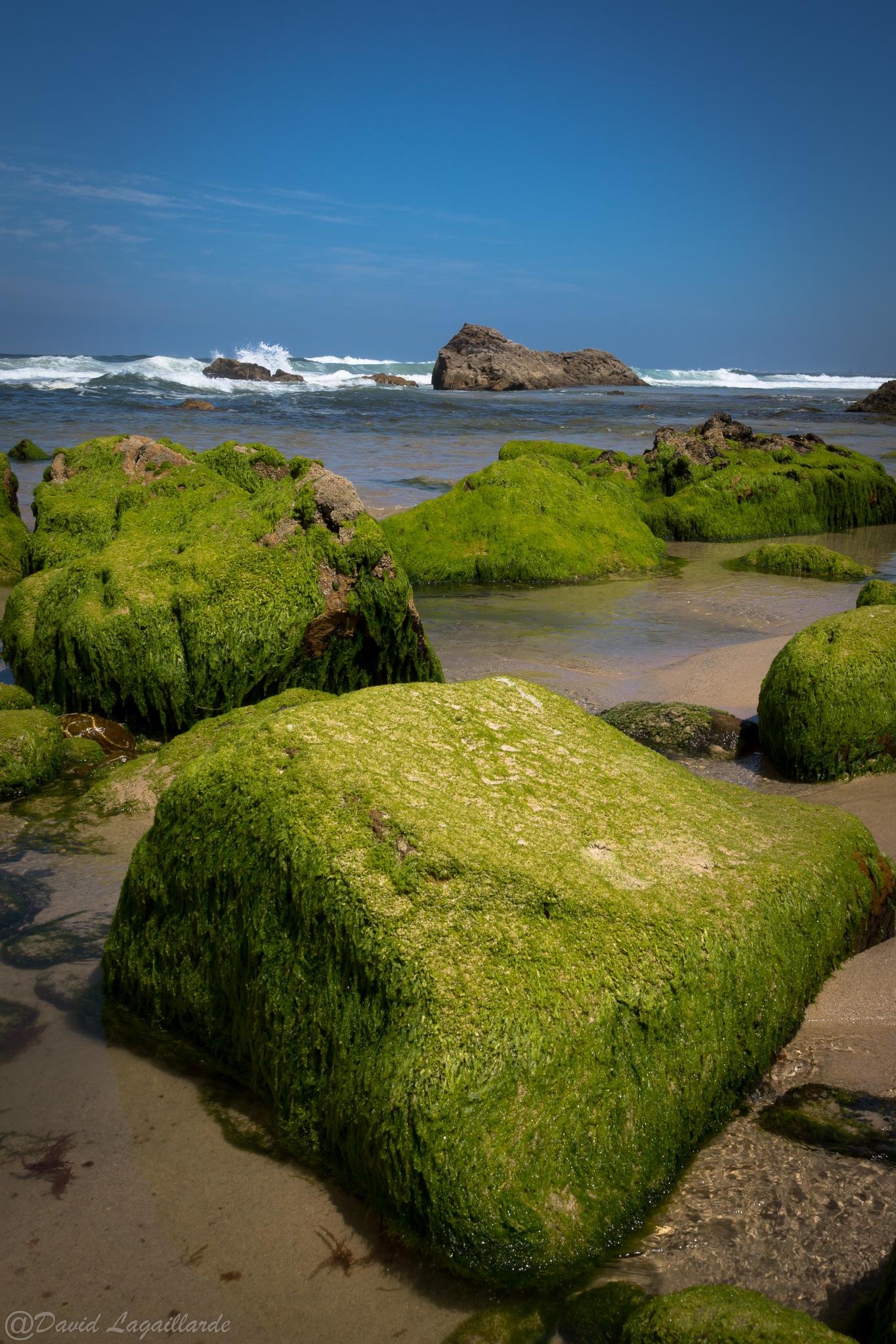 Low-tide green rocks by DLagaillarde