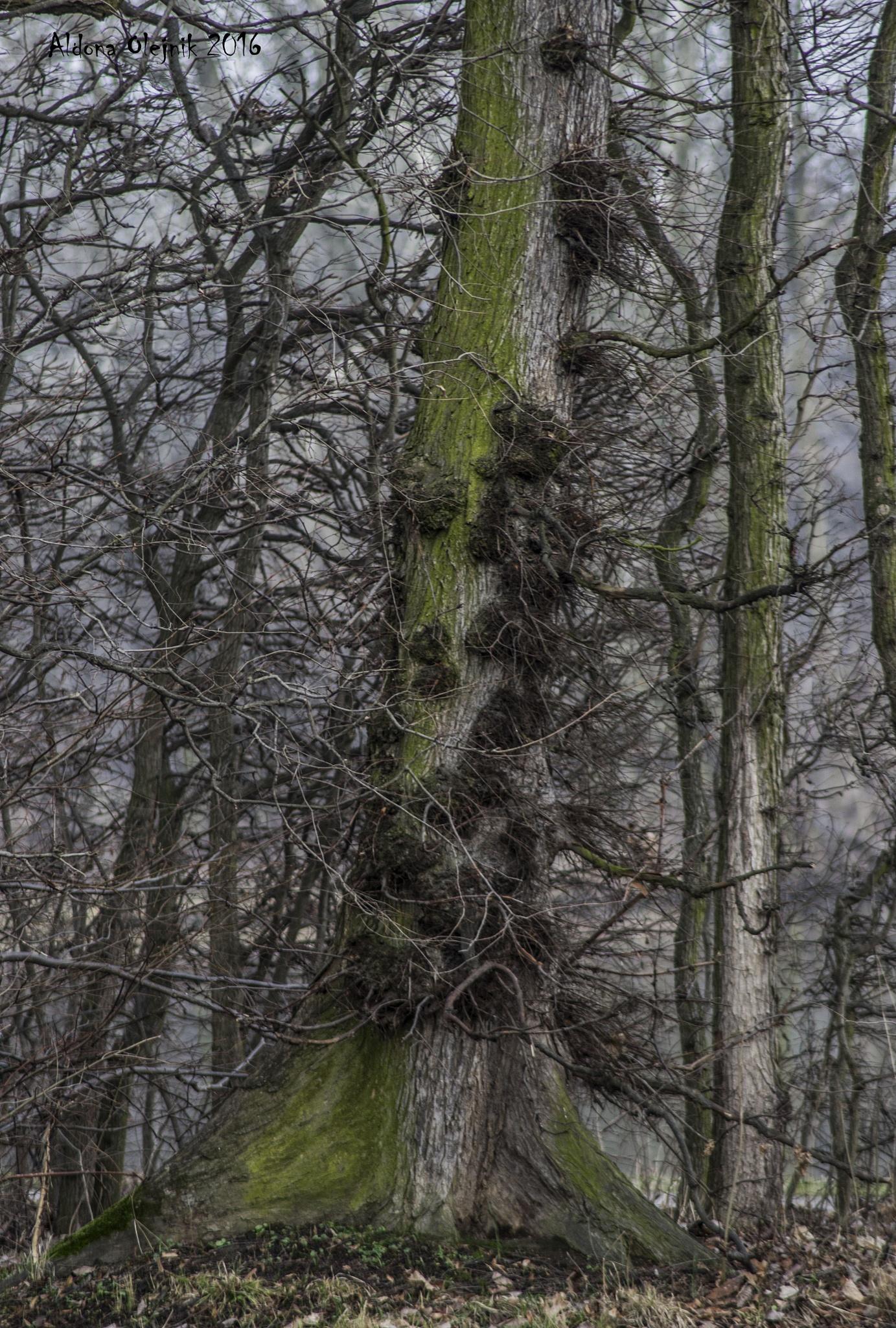 alone tree by aldona filla