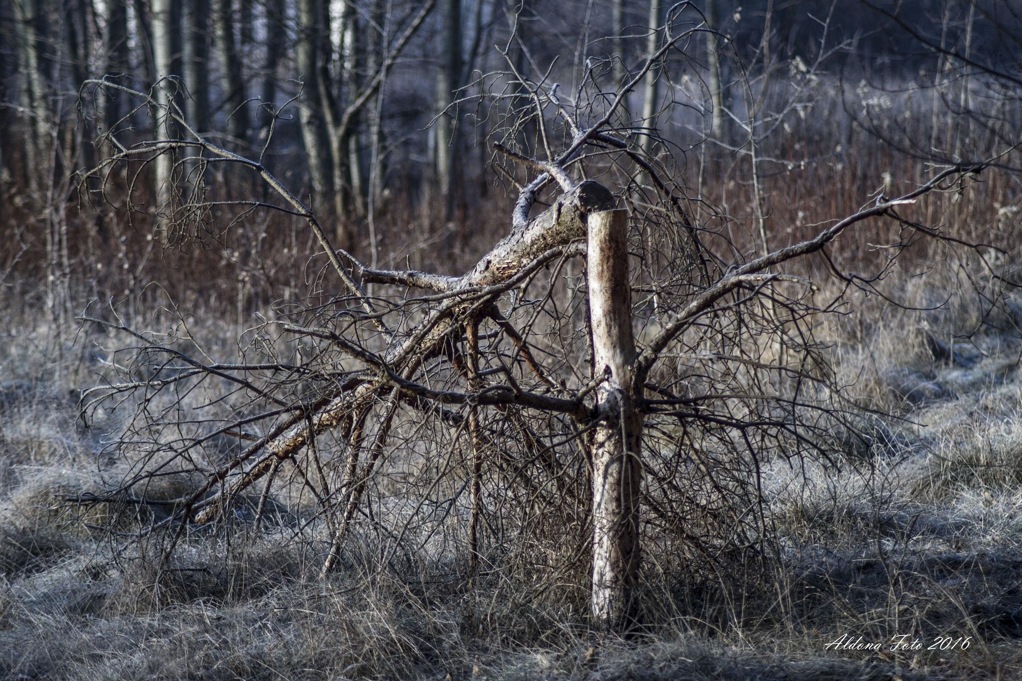 tree by aldona filla