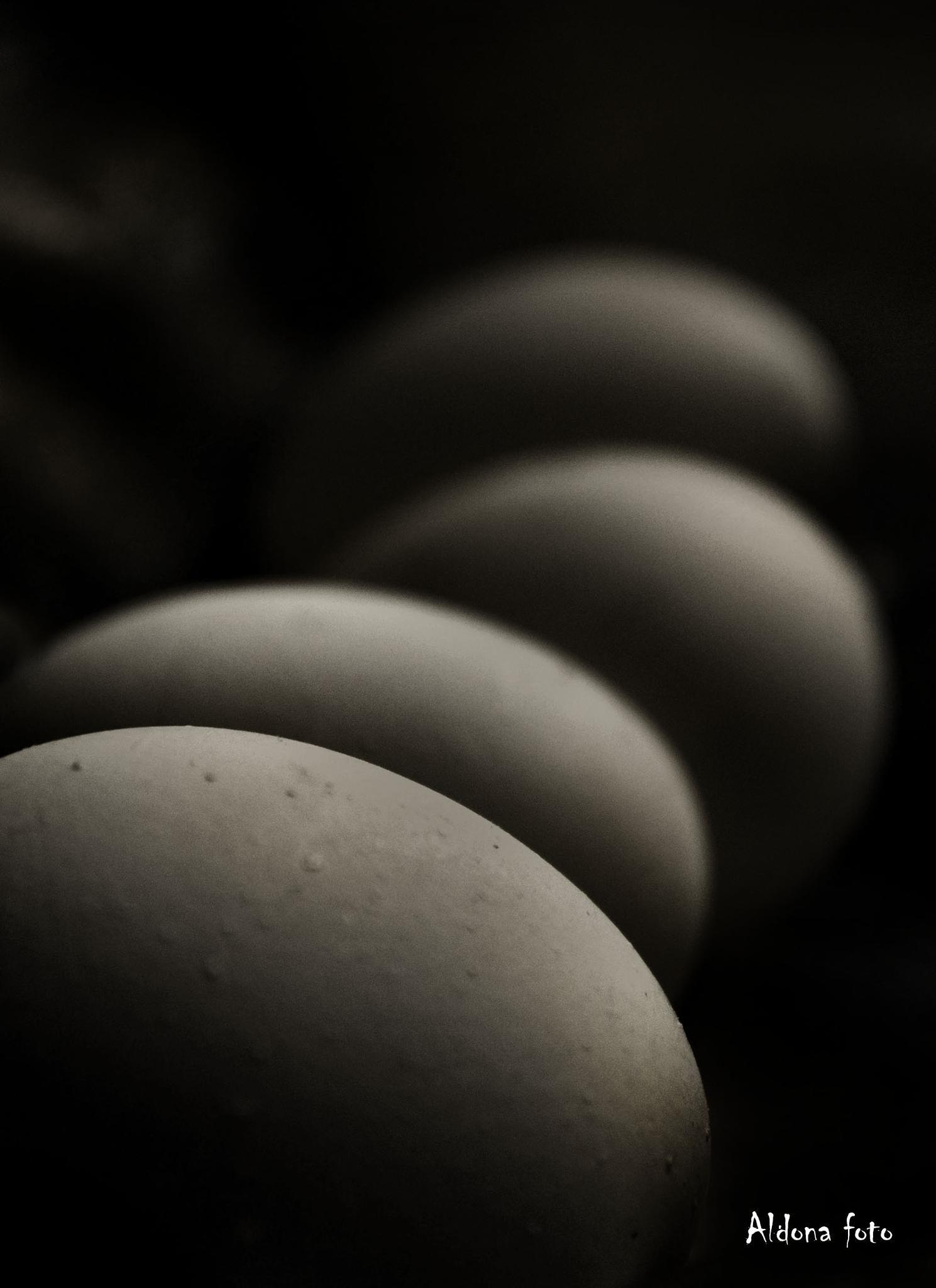 eggs by aldona filla