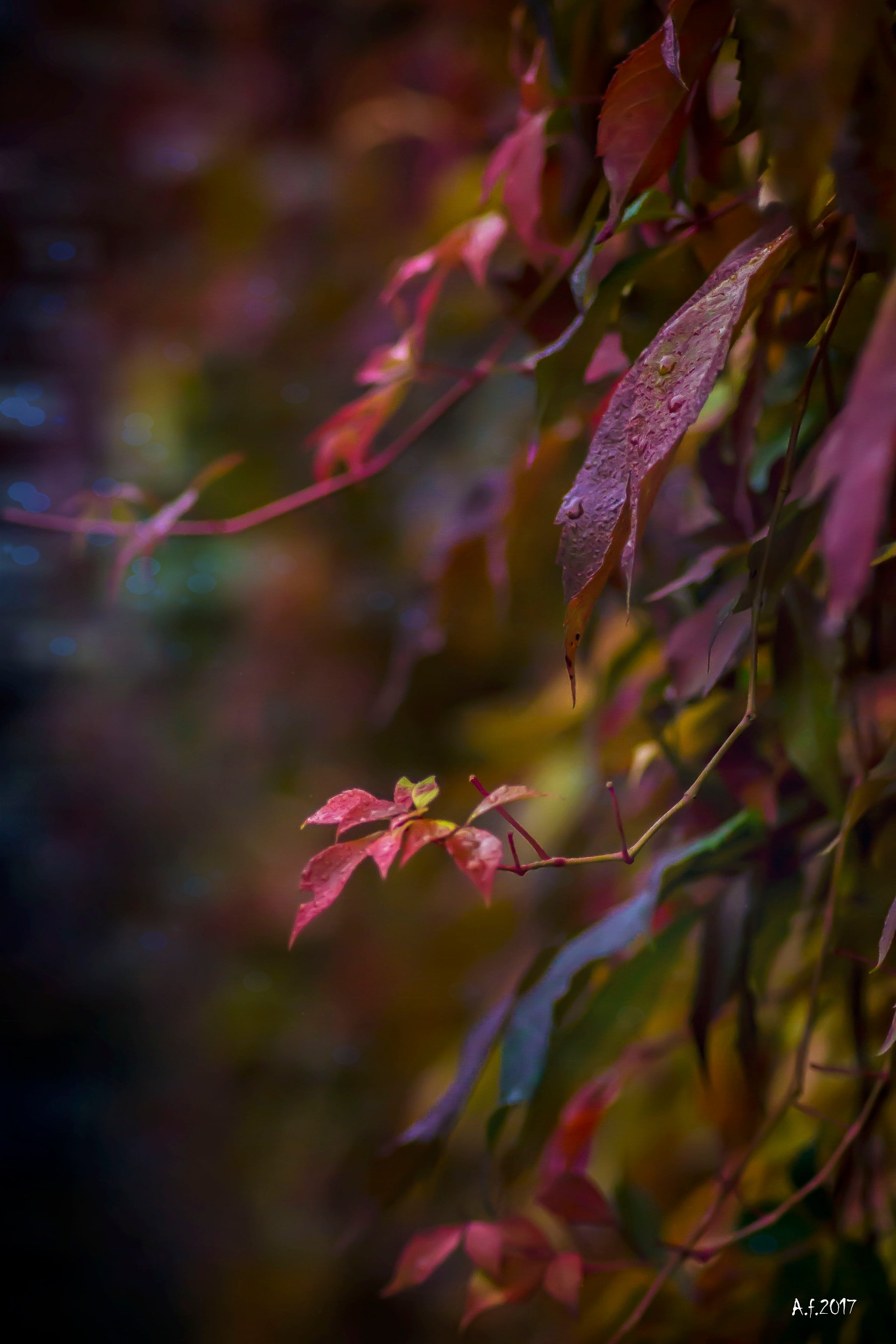 a bit of the autumn on the fence by aldona filla