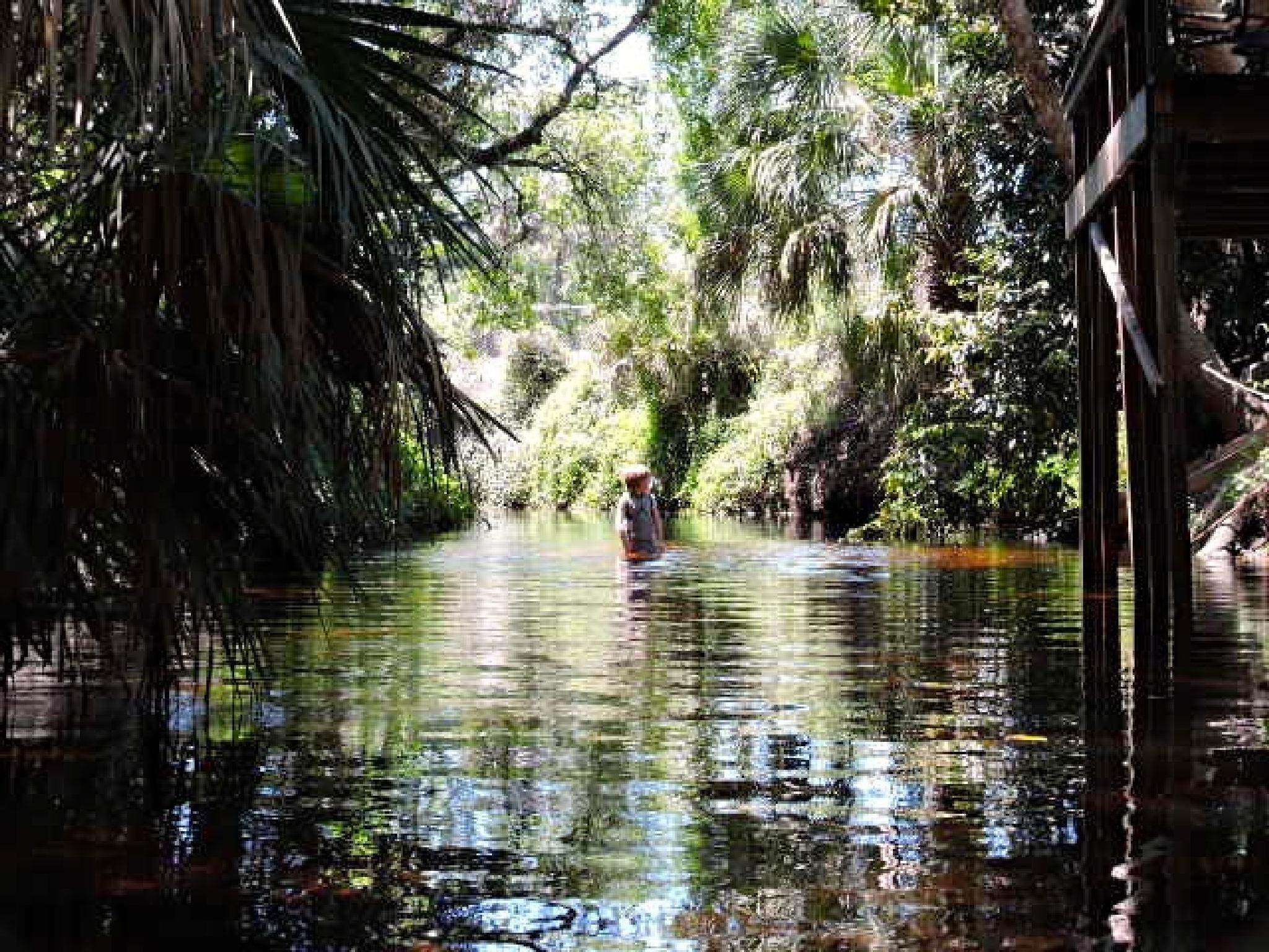 A native Floridian boy wades in the Imperial River. by belinda.phillips.90