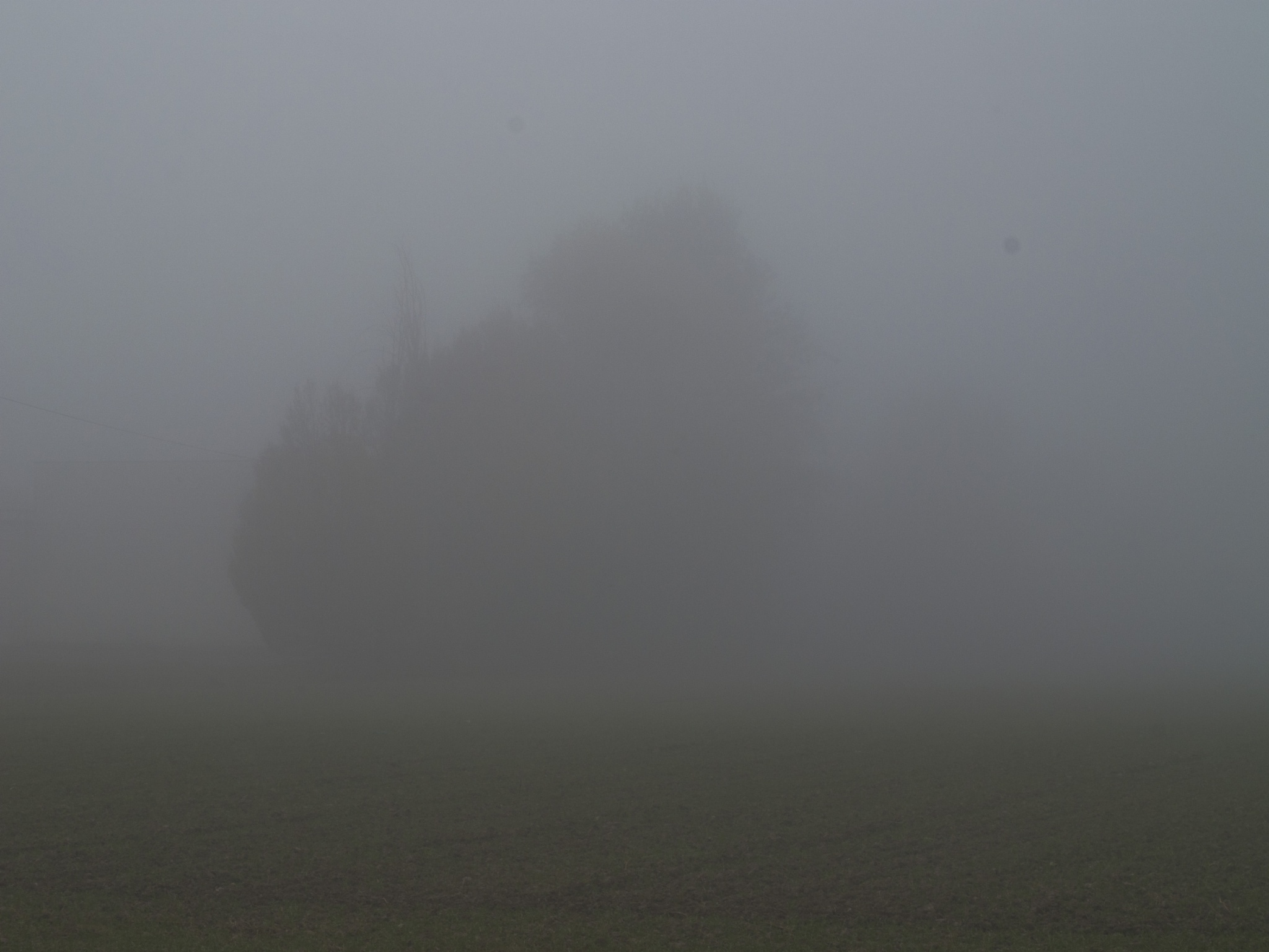 First Fog 04 by MFPhotographer