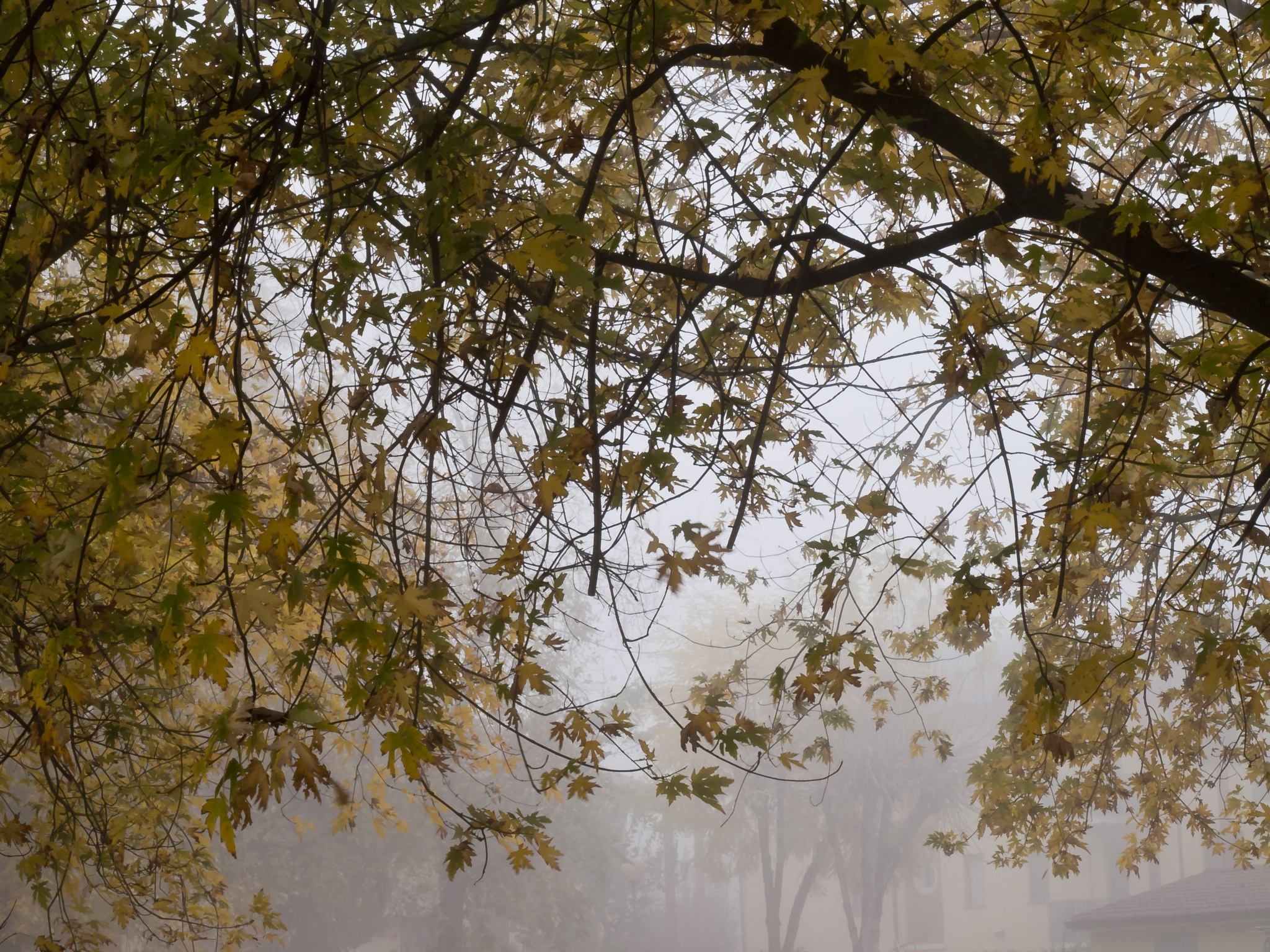 First Fog 05 by MFPhotographer