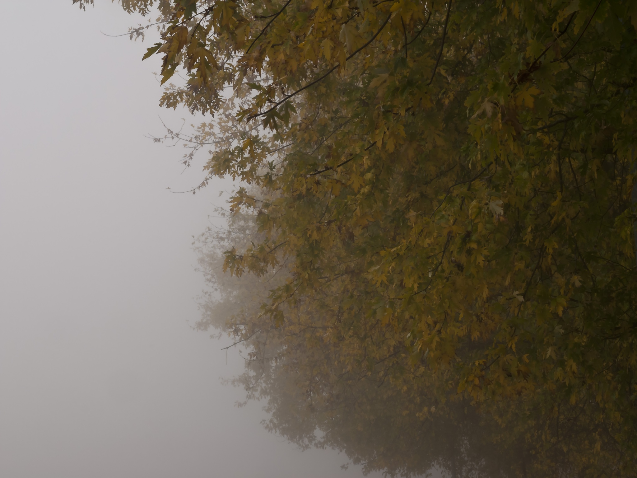 First Fog 06 by MFPhotographer