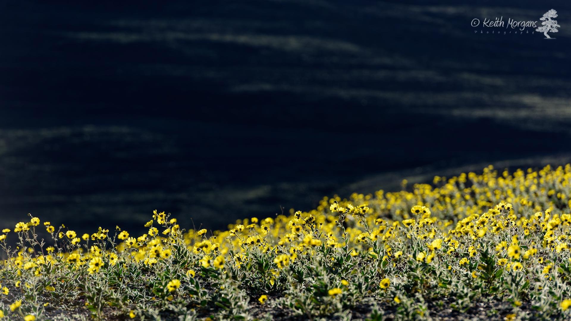 Death Valley, CA by keith.morgans