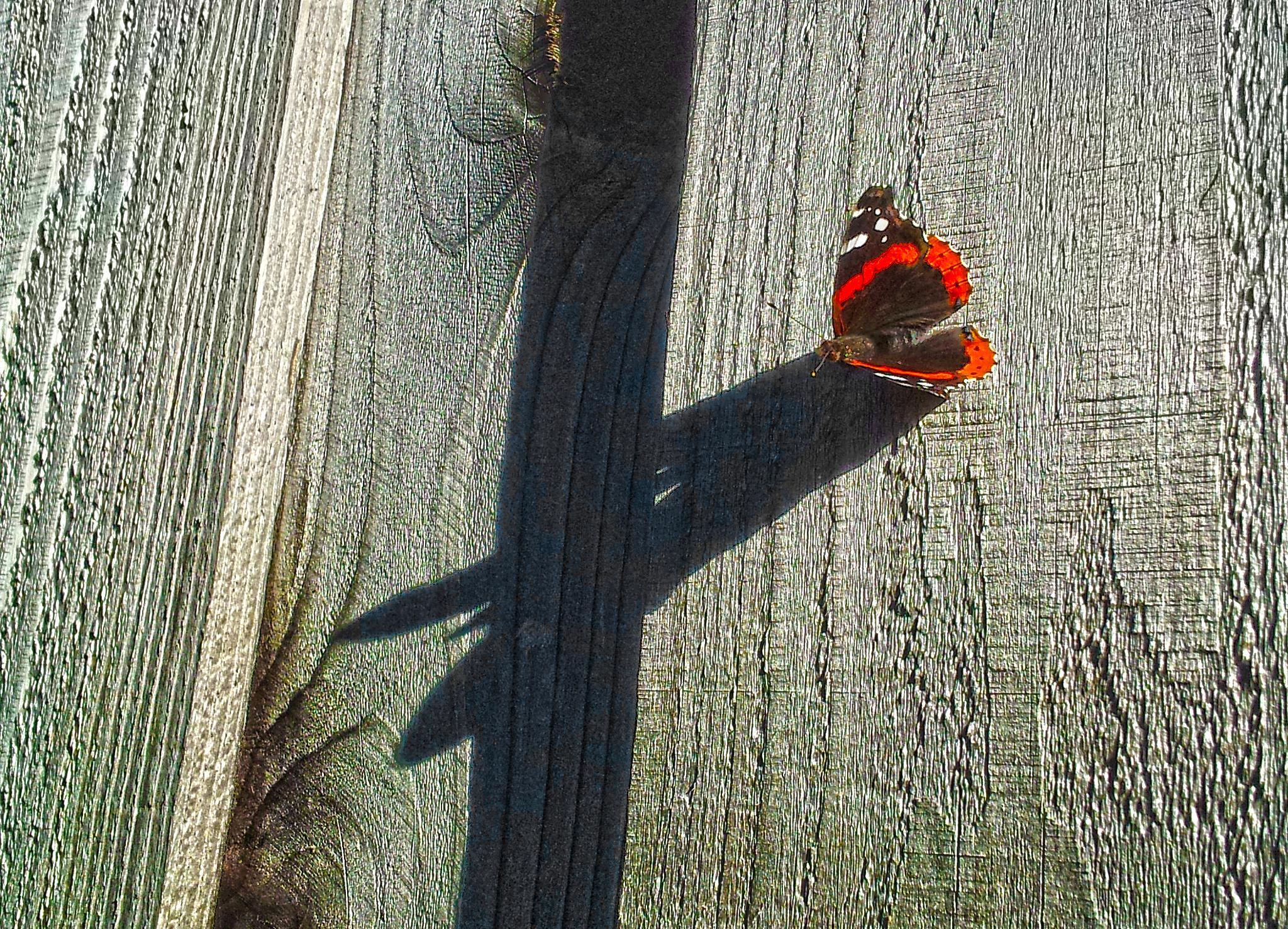 Butterfly Shadows by Tony Coelho Ramos