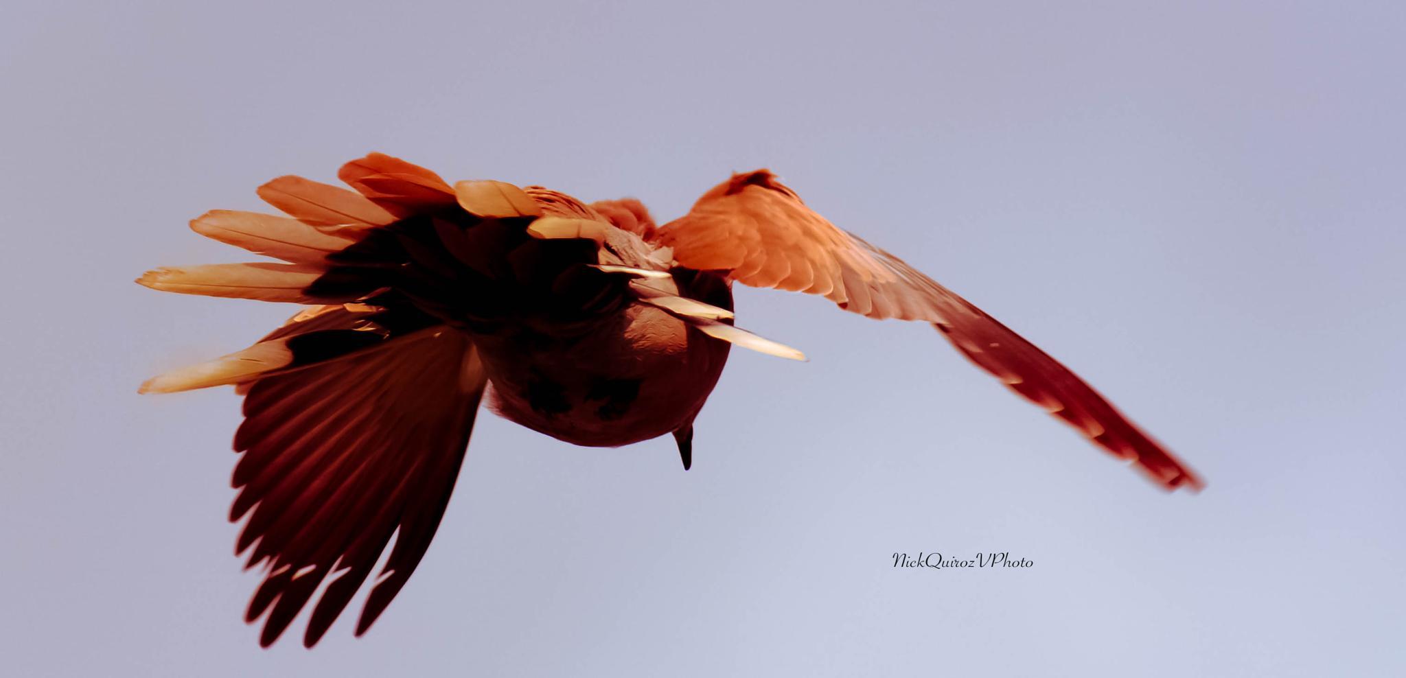 the fly.. by nickquirozvillavicencio