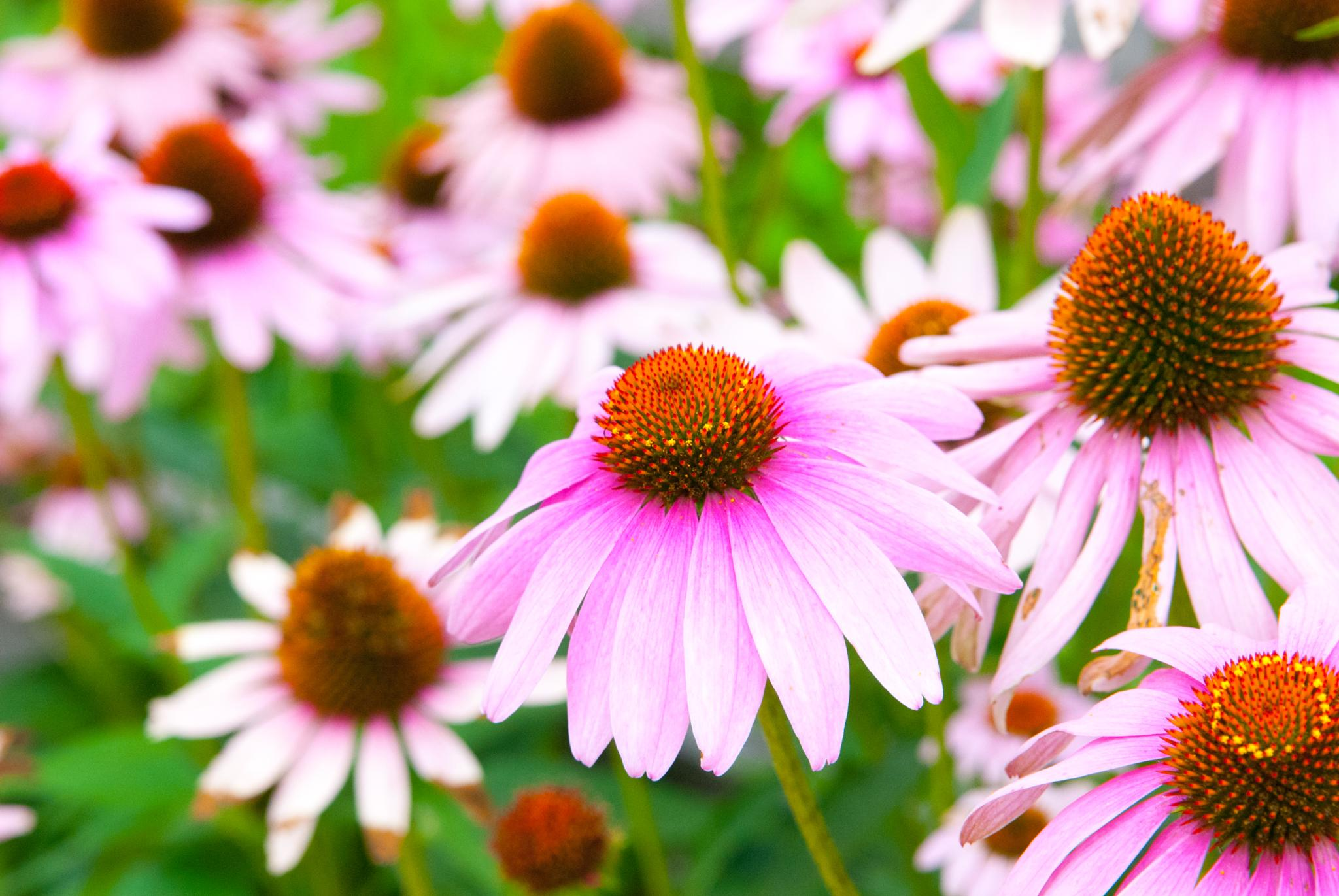 Wild FLowers by mgrphotography