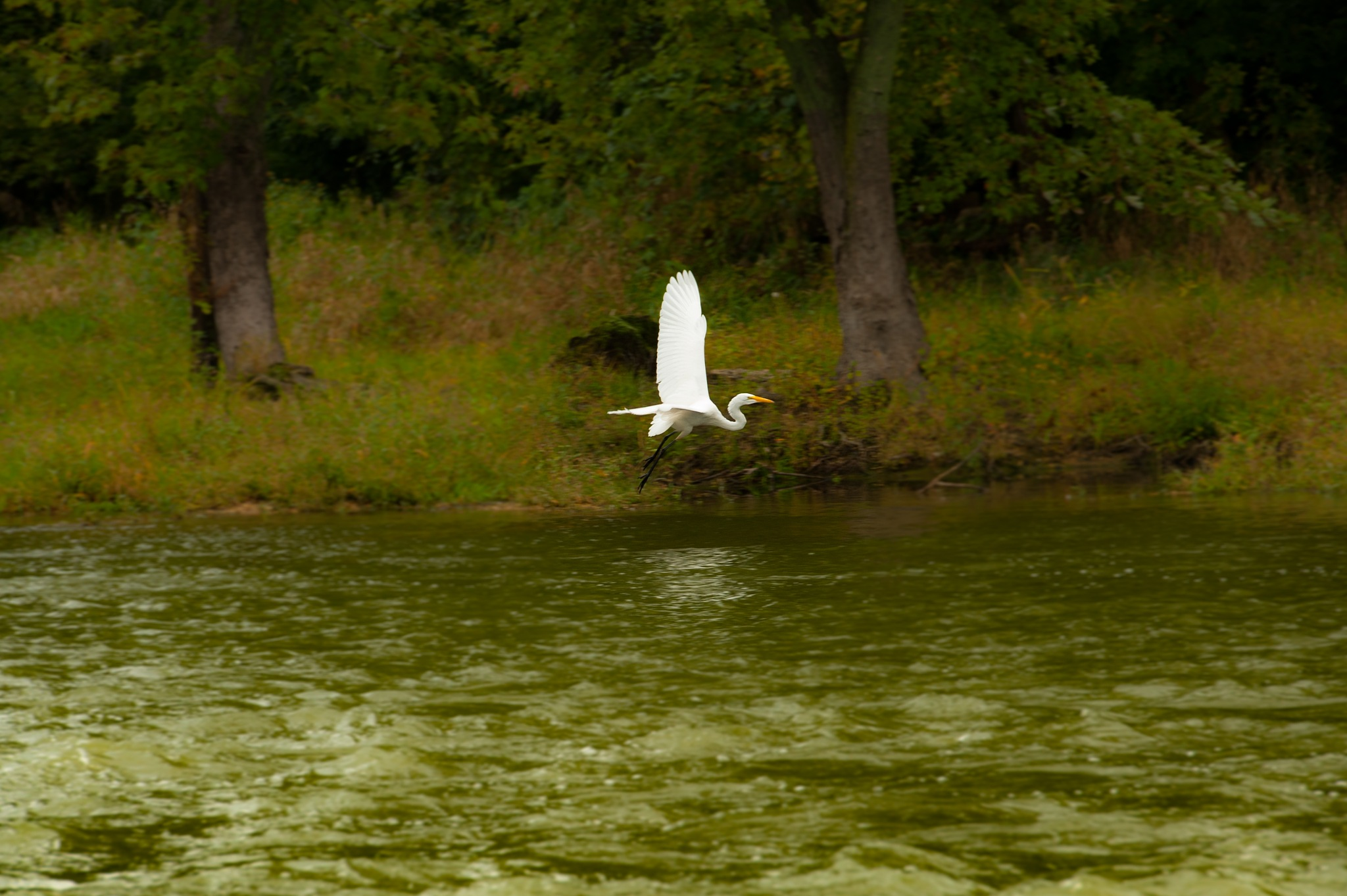 No Egrets by mgrphotography