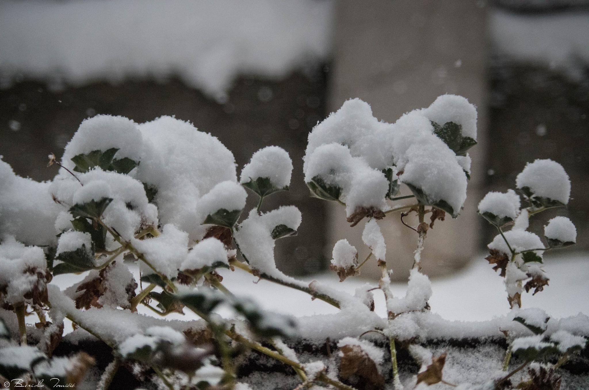 snow III by harlekino