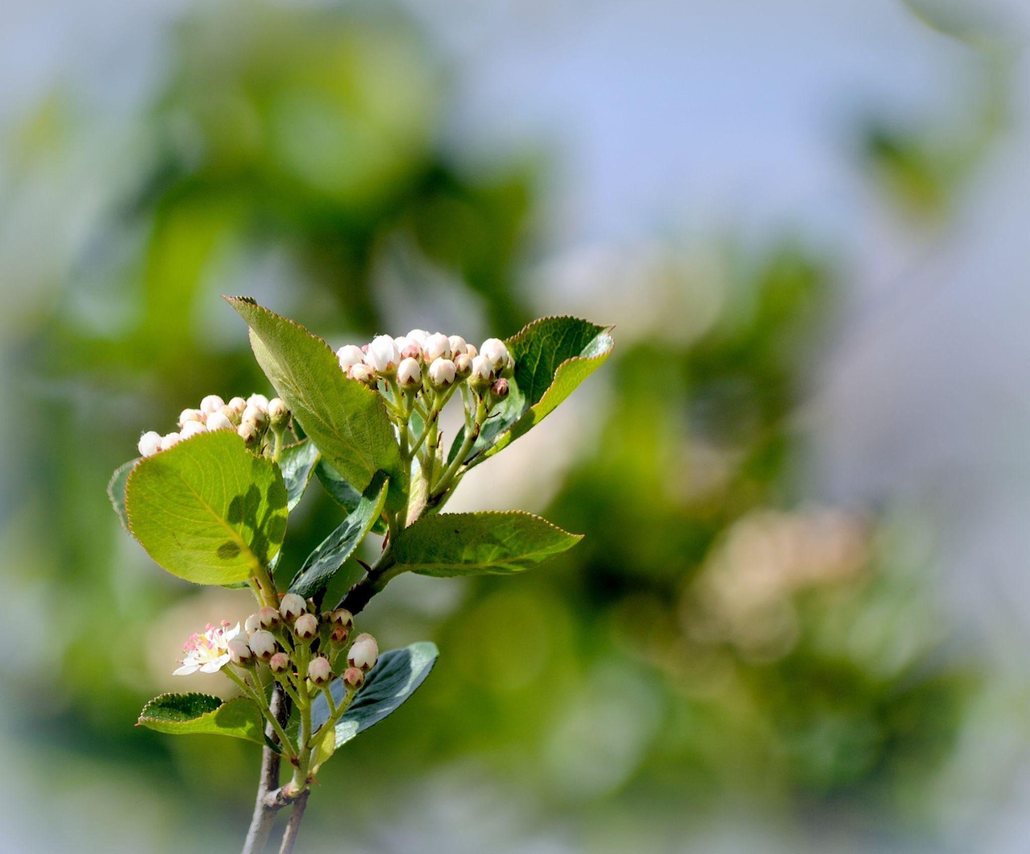 Flowers by habibi27