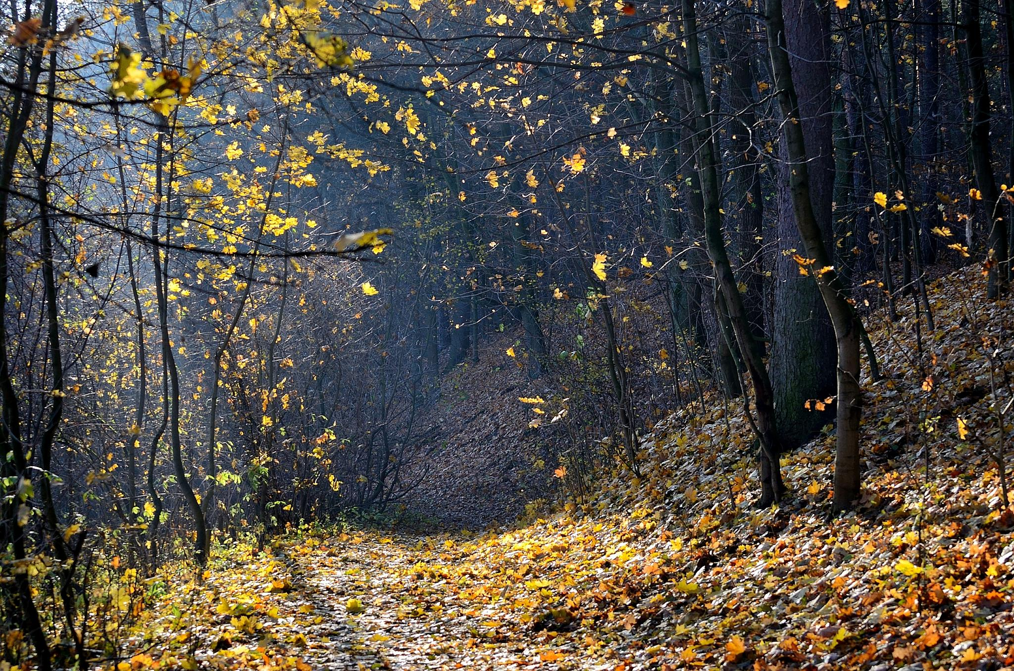 Autumn in the forest by habibi27