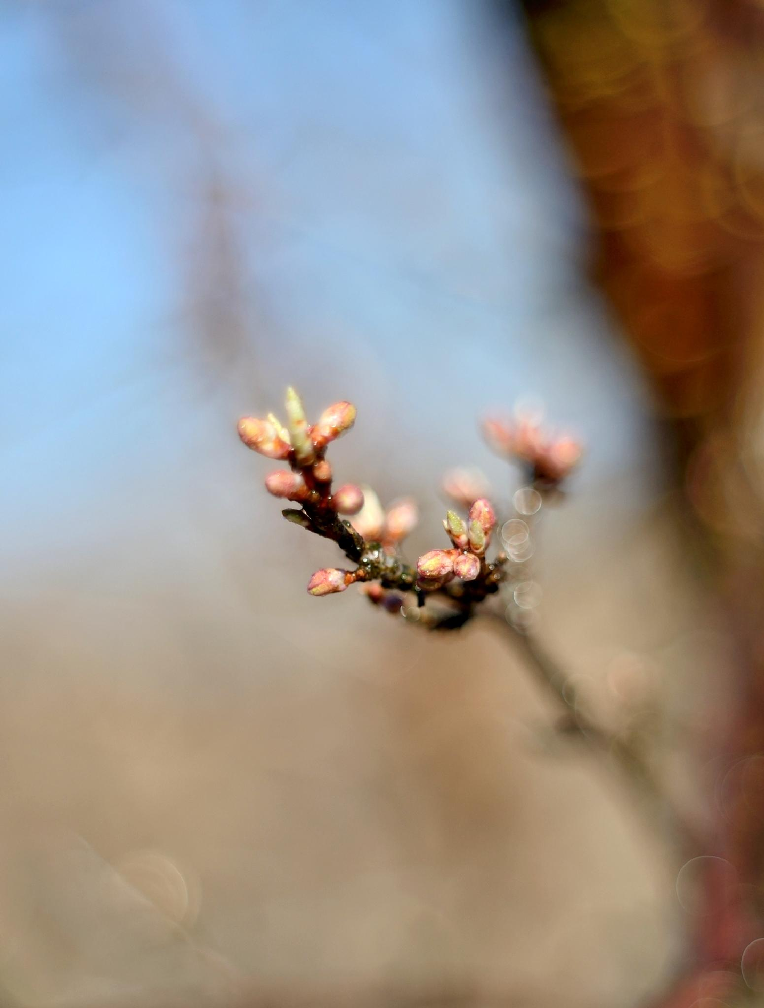 Flower buds on a twig by habibi27