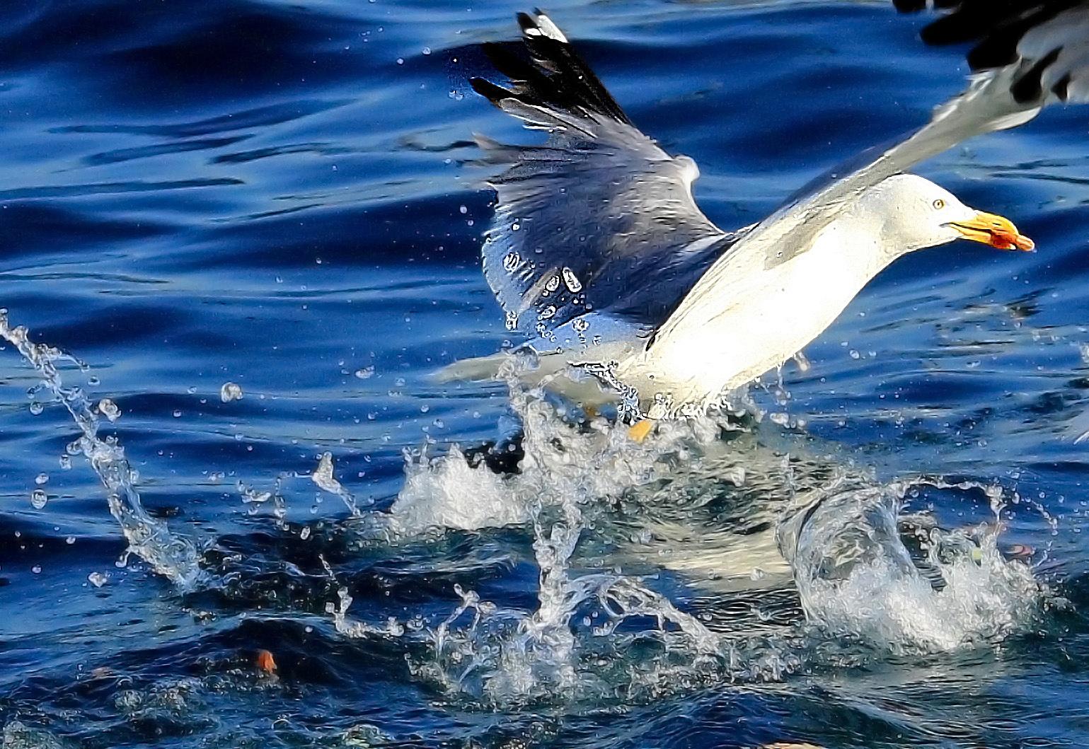 The Big Splash by Sumit Nandy