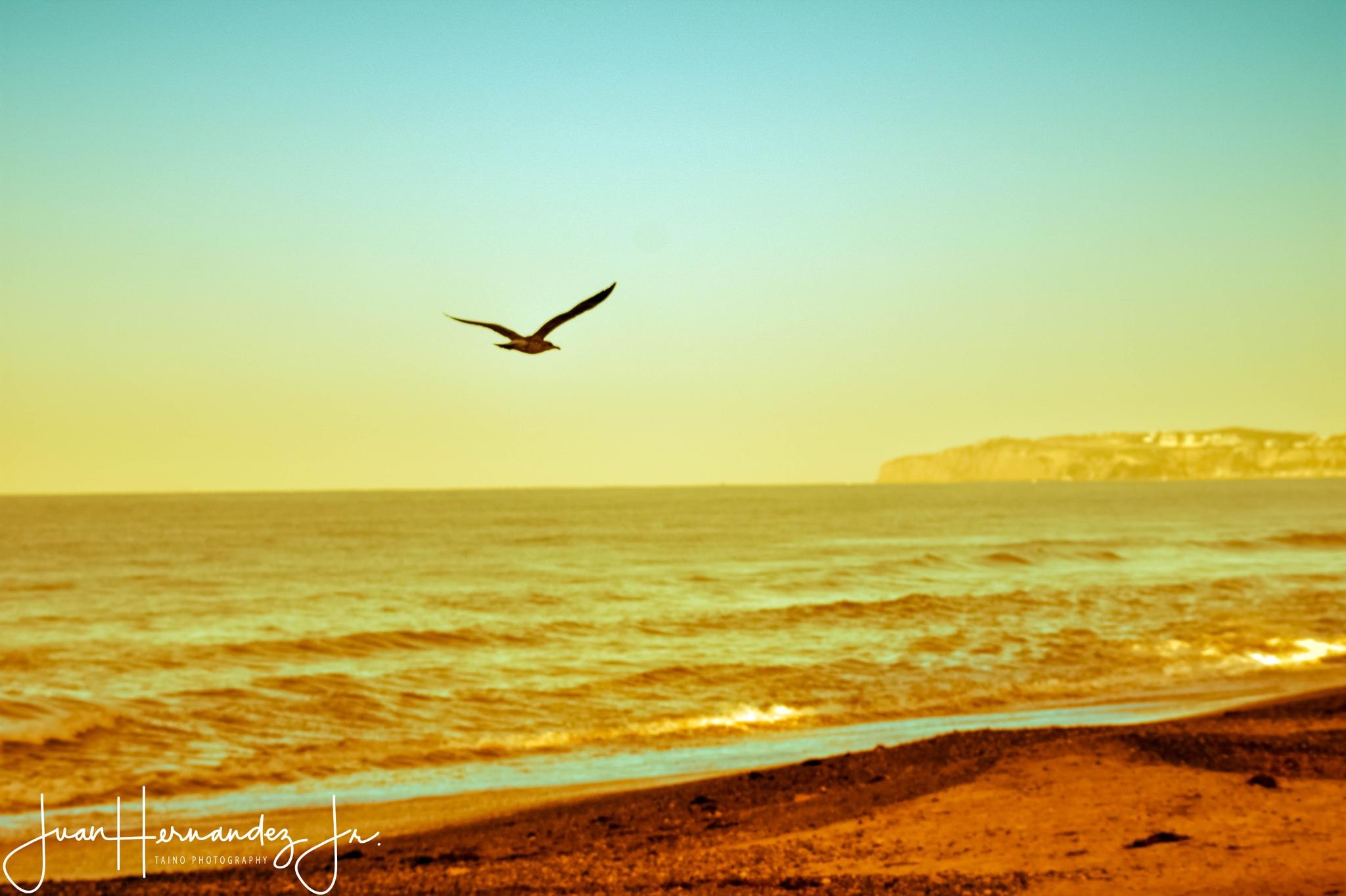 """""""Flying Solo"""" by Juan Hernandez Jr."""