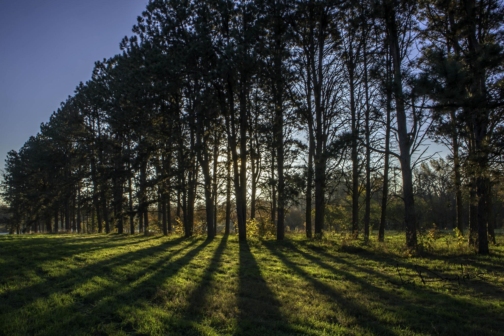 Morning Shadows by Jay Douglass