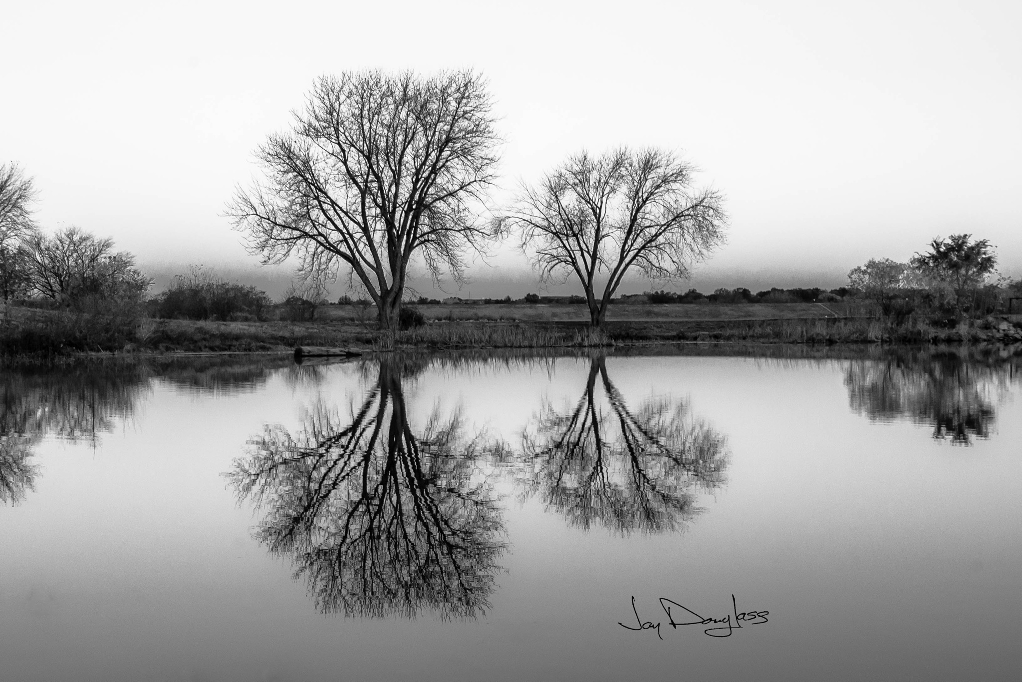 Tree Reflection B&W by Jay Douglass