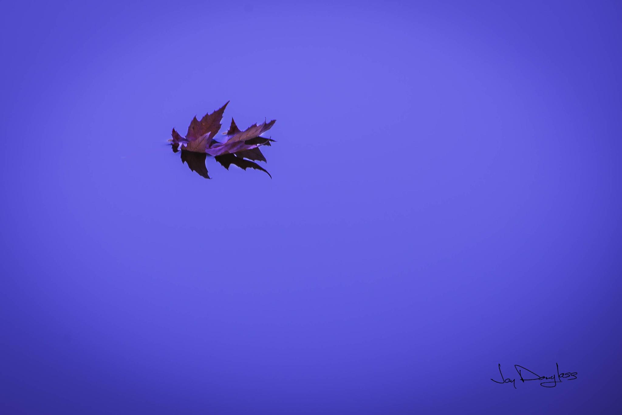 Floating Leaf by Jay Douglass