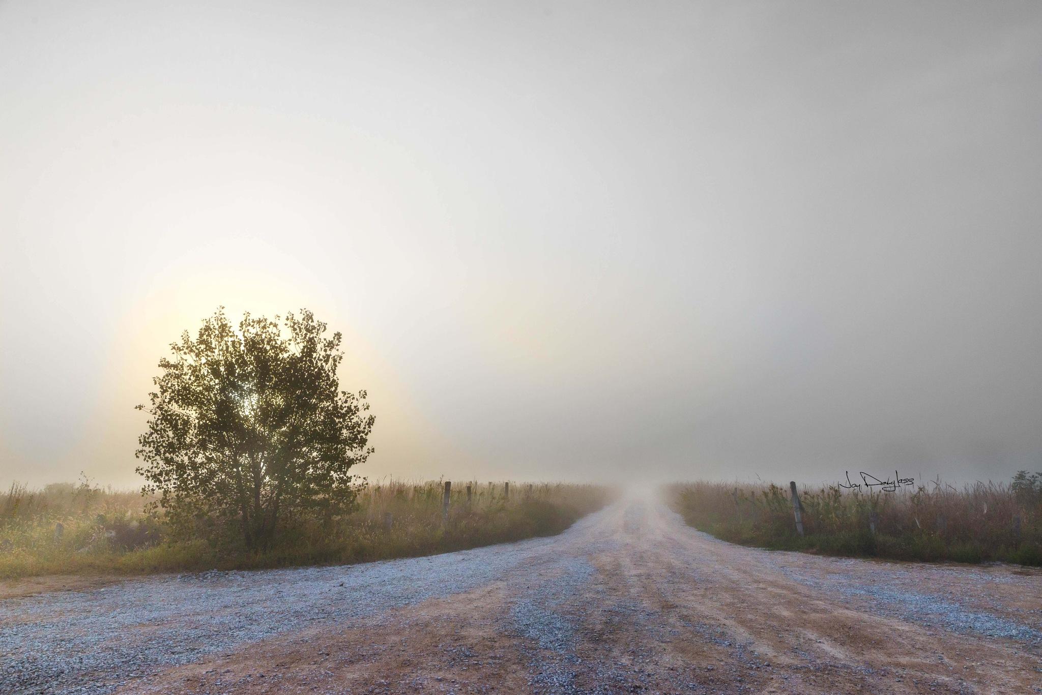 Into the fog by Jay Douglass
