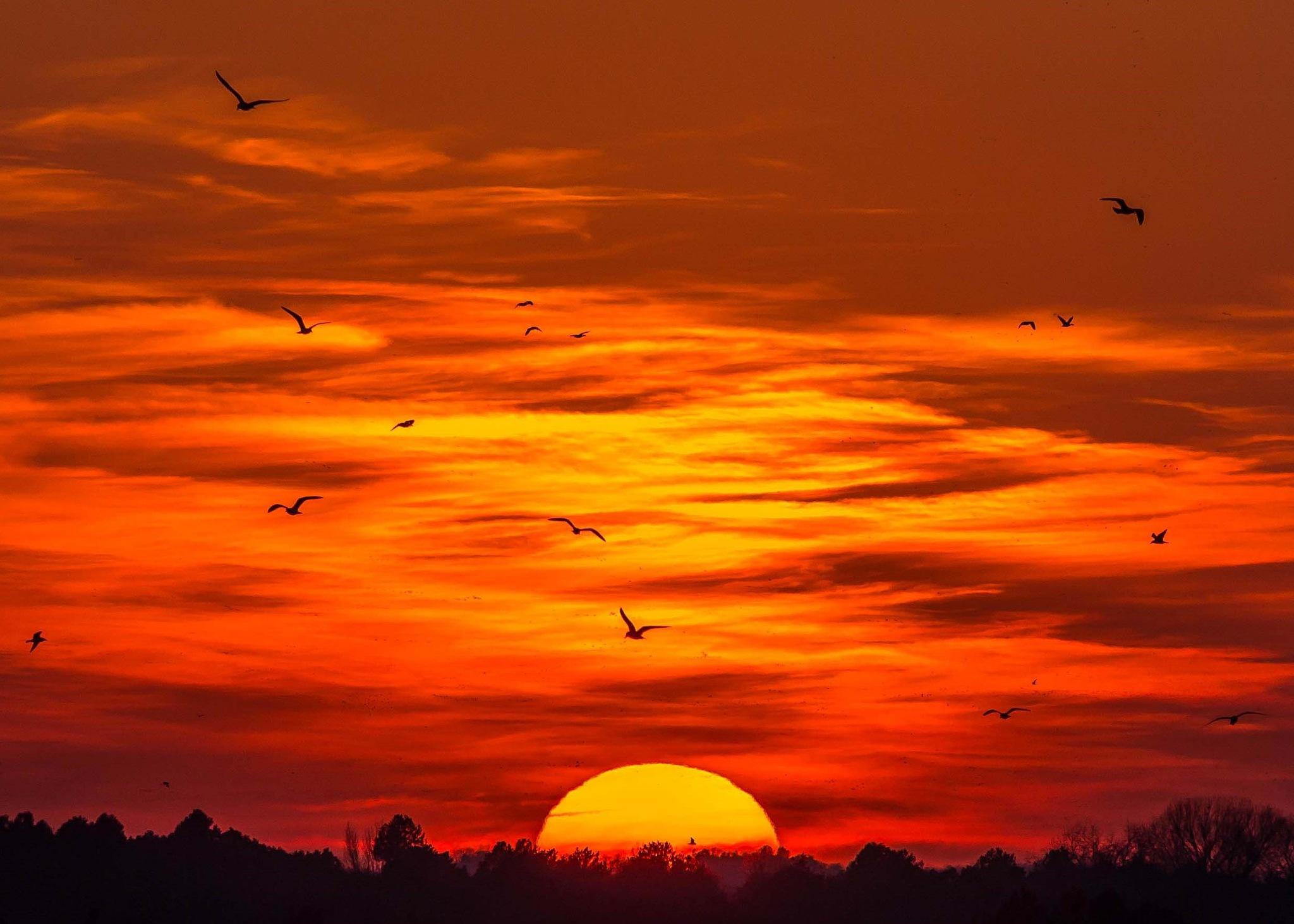 Gulls at Sunset by Jay Douglass