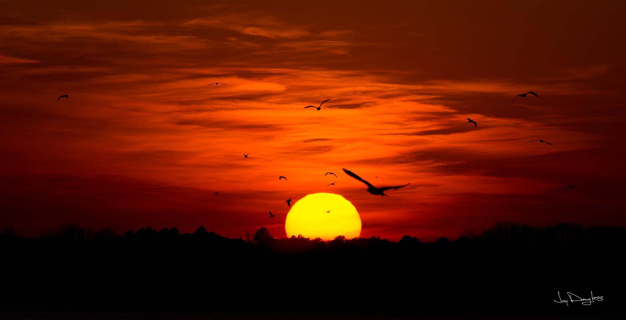 Birds at Sunset by Jay Douglass