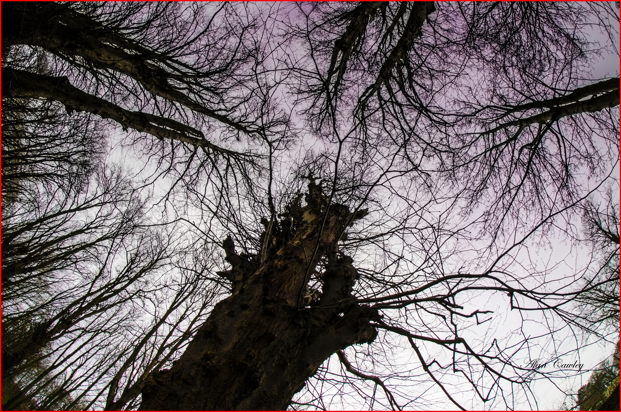 tree tops by acawley1