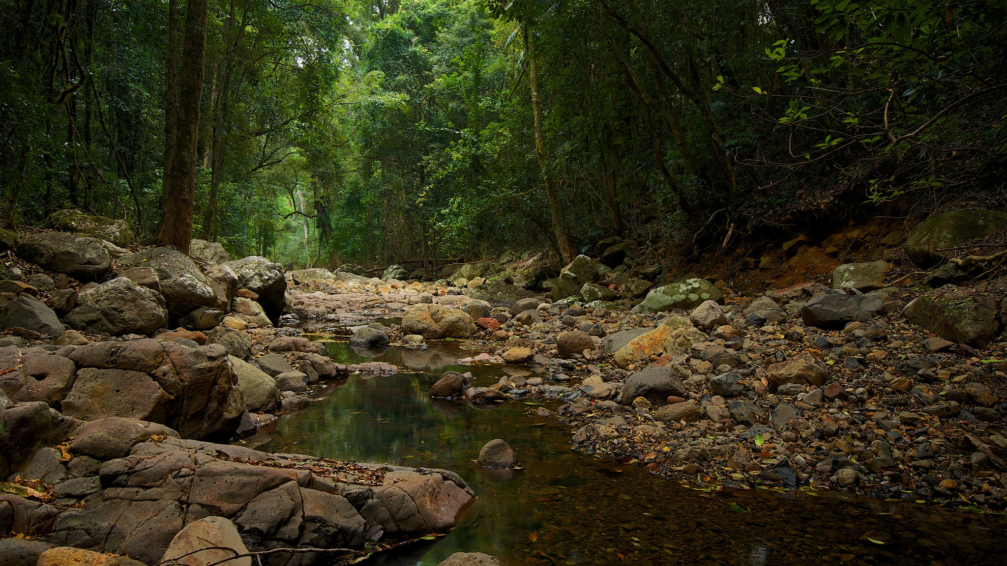 Springbrook rainforest by EmanuelPapamanolis