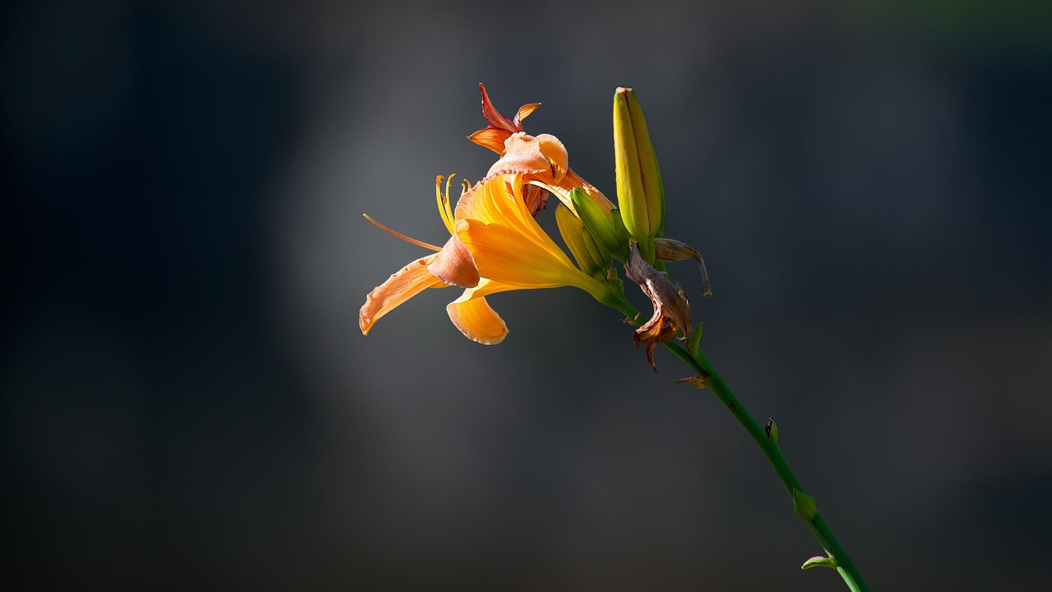 Nature in the spotlight by EmanuelPapamanolis