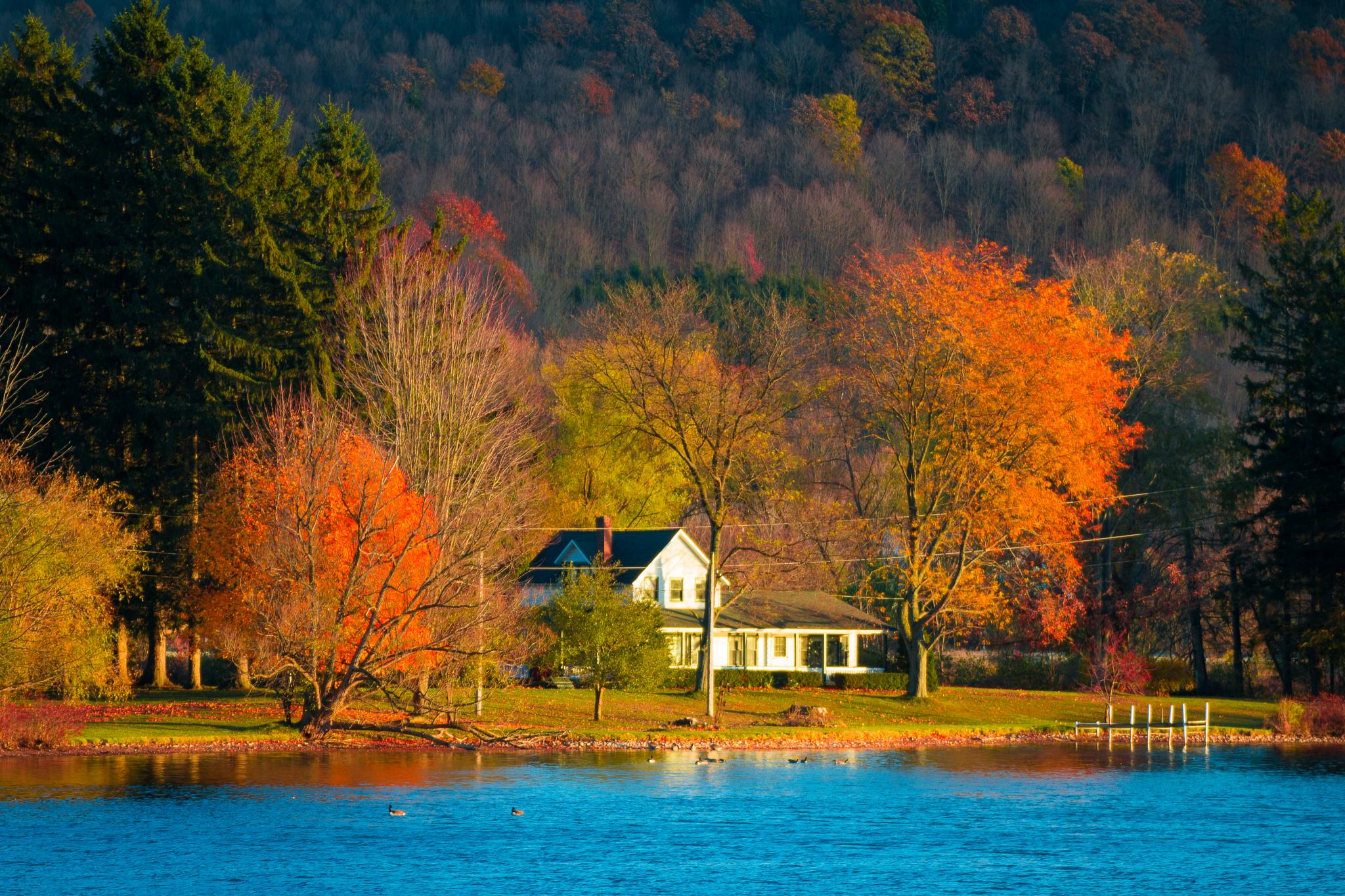 Fall Colors 3 by Don F