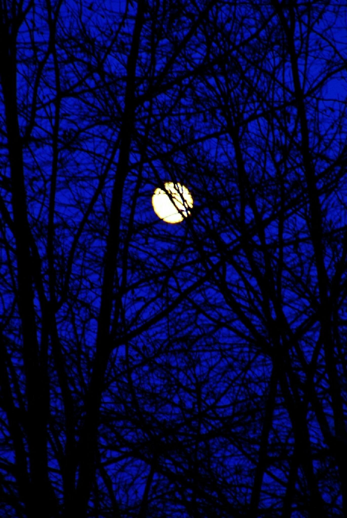 Moon Glow by goldenoo7