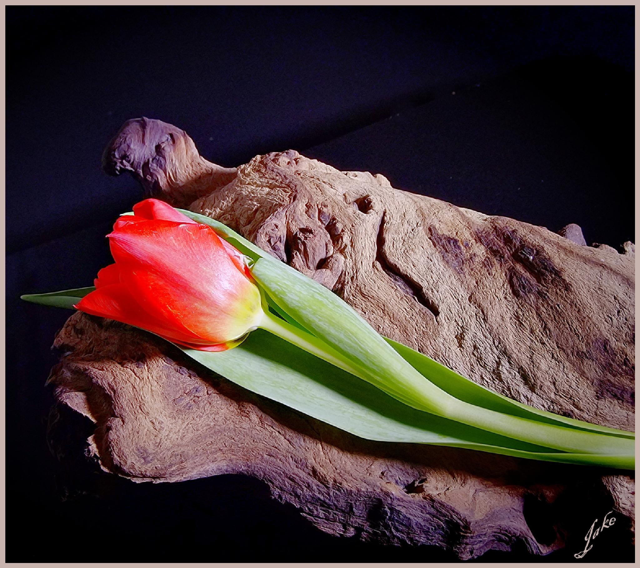 Tulip and driftwood by JOHN WATERS