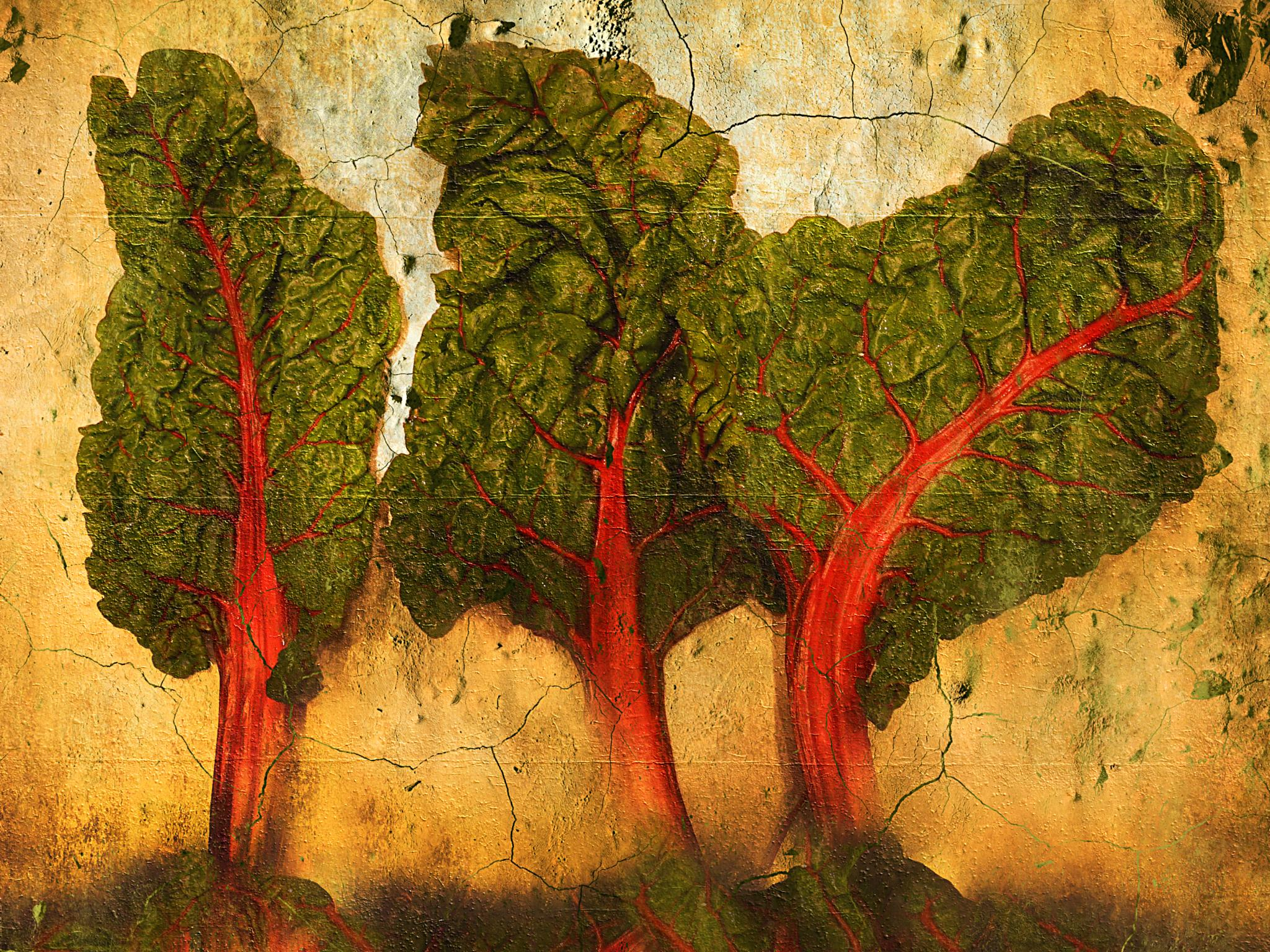 Swiss Chard Trees by mark.khan.7161