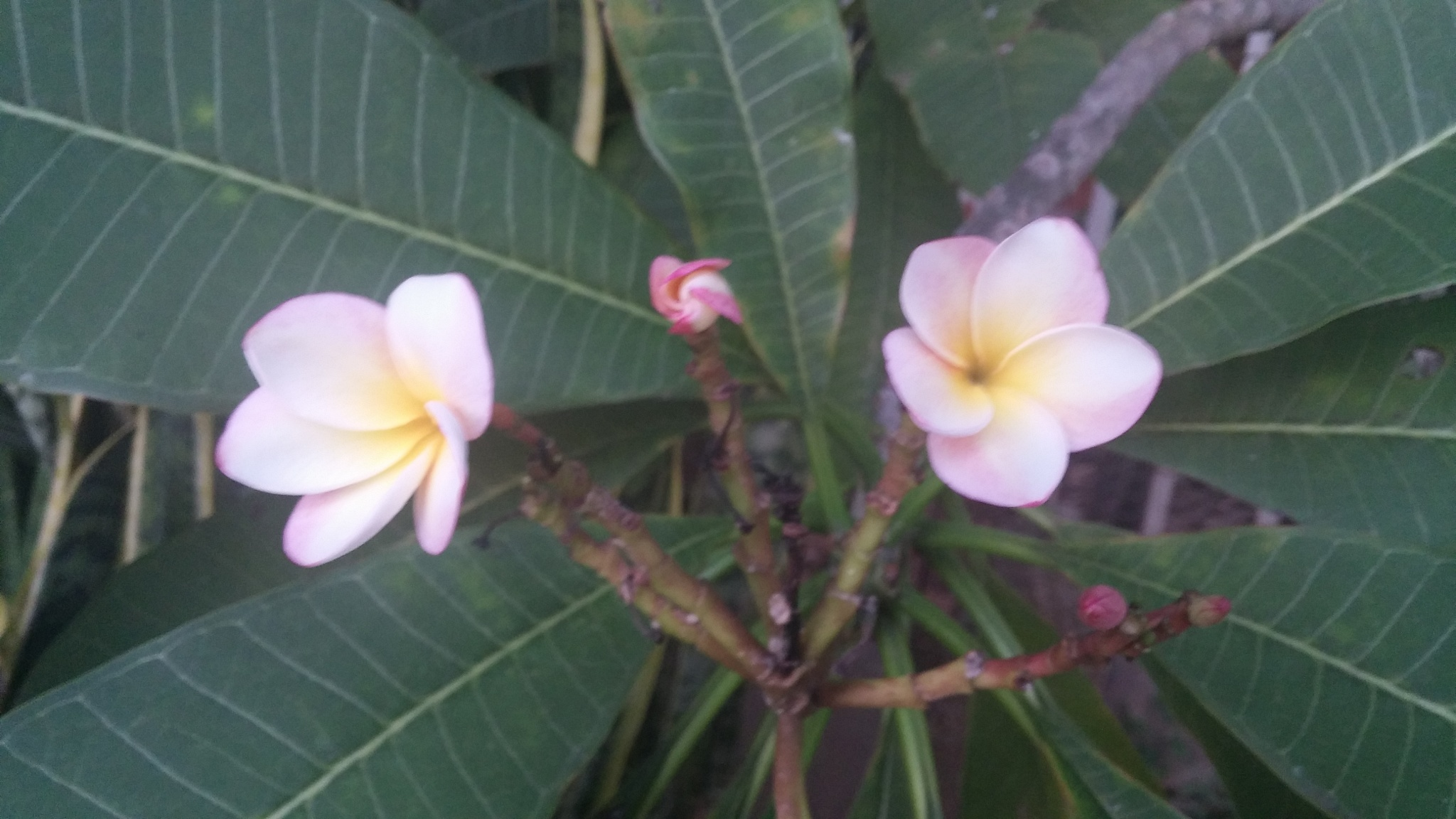 Flowers by alvin.cordova.37